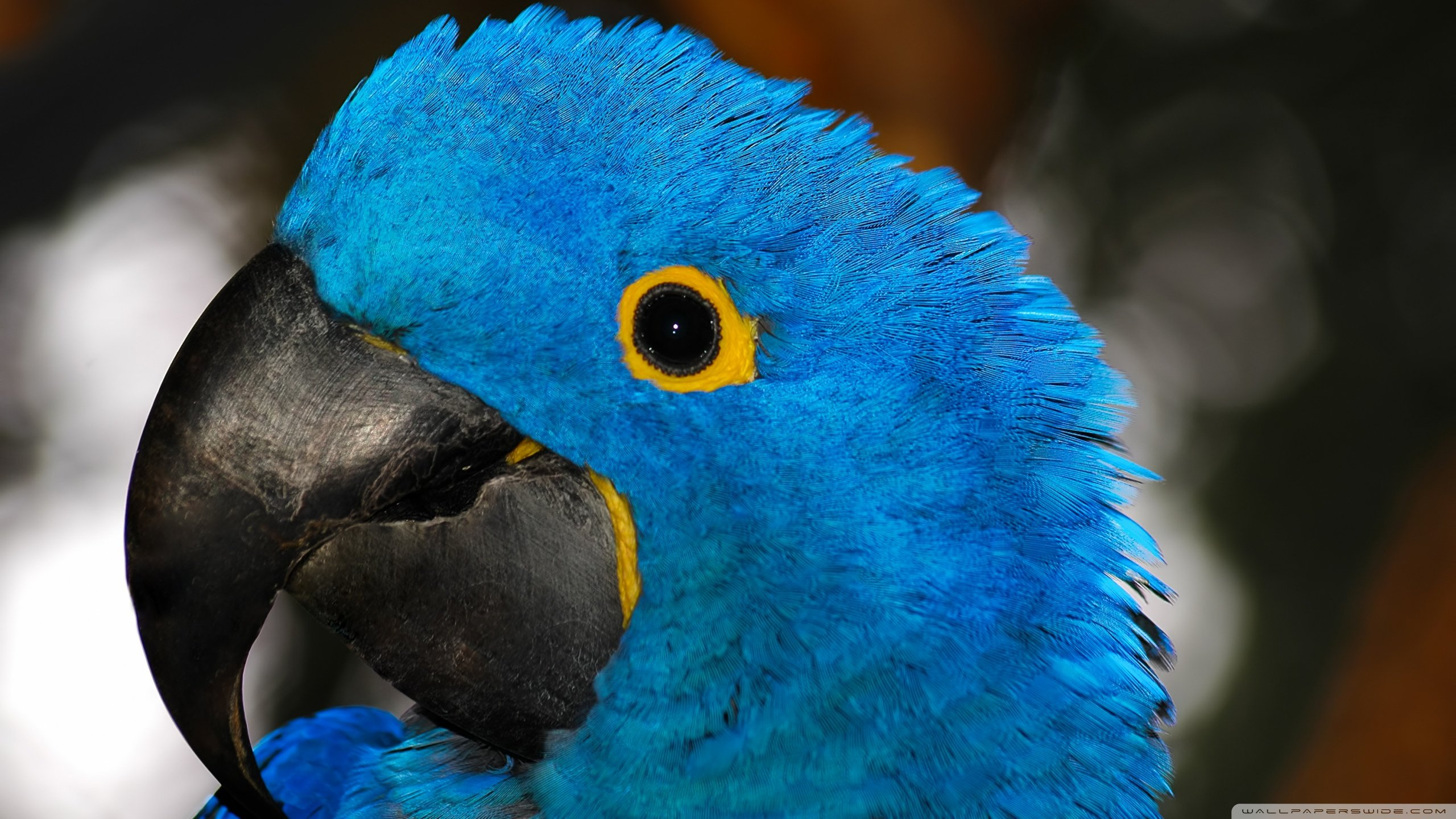 Free Macaw high quality wallpaper ID:46322 for hd 2560x1440 PC