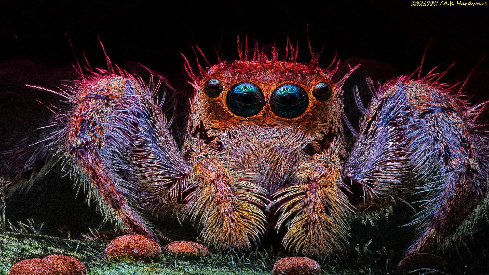 Free download Spider background ID:22239 hd 1920x1080 for desktop