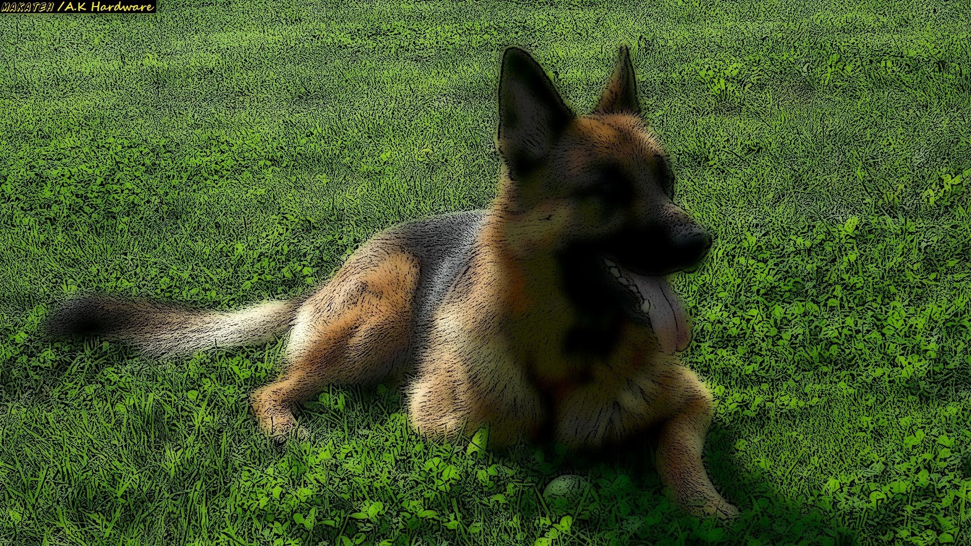 Awesome German Shepherd free background ID:111108 for full hd 1920x1080 PC