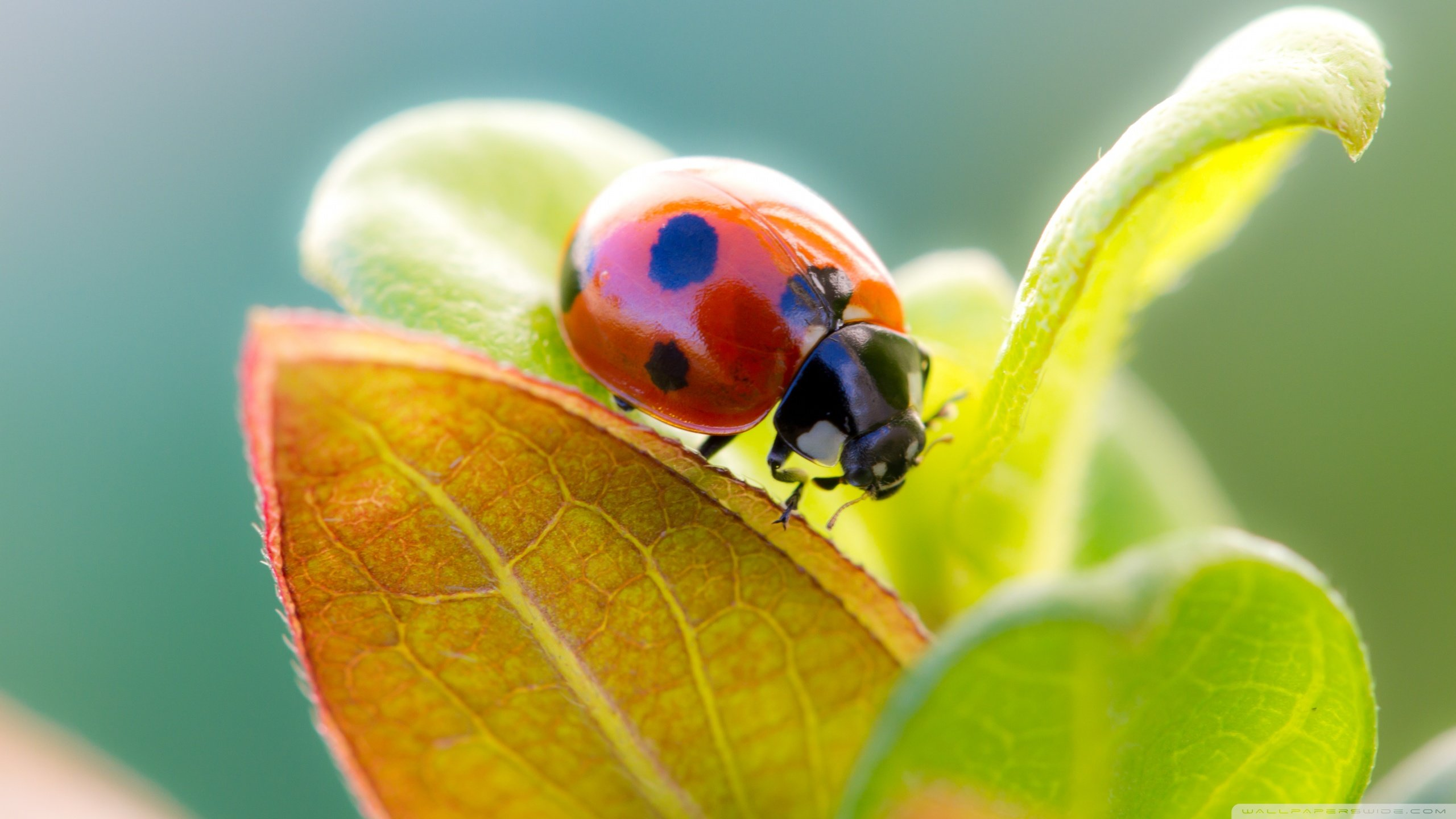 Free Ladybug high quality wallpaper ID:270428 for hd 2560x1440 desktop