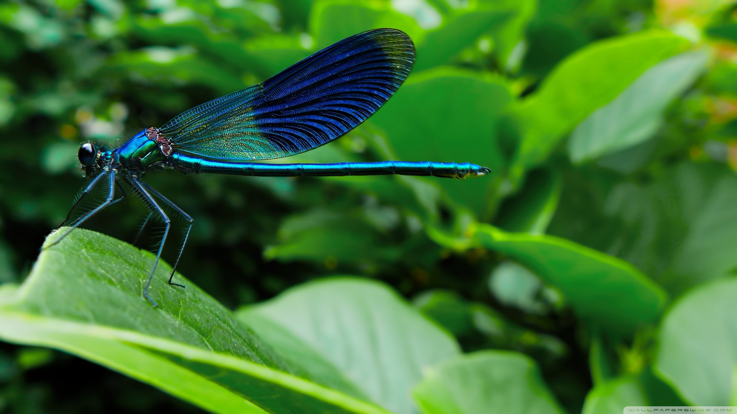 Best Dragonfly wallpaper ID:467556 for High Resolution hd 2560x1440 PC