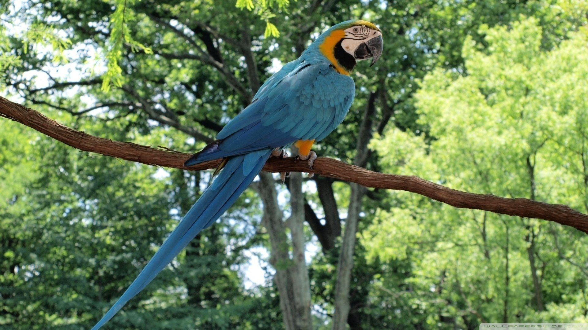 Free Macaw high quality background ID:46462 for full hd 1920x1080 PC