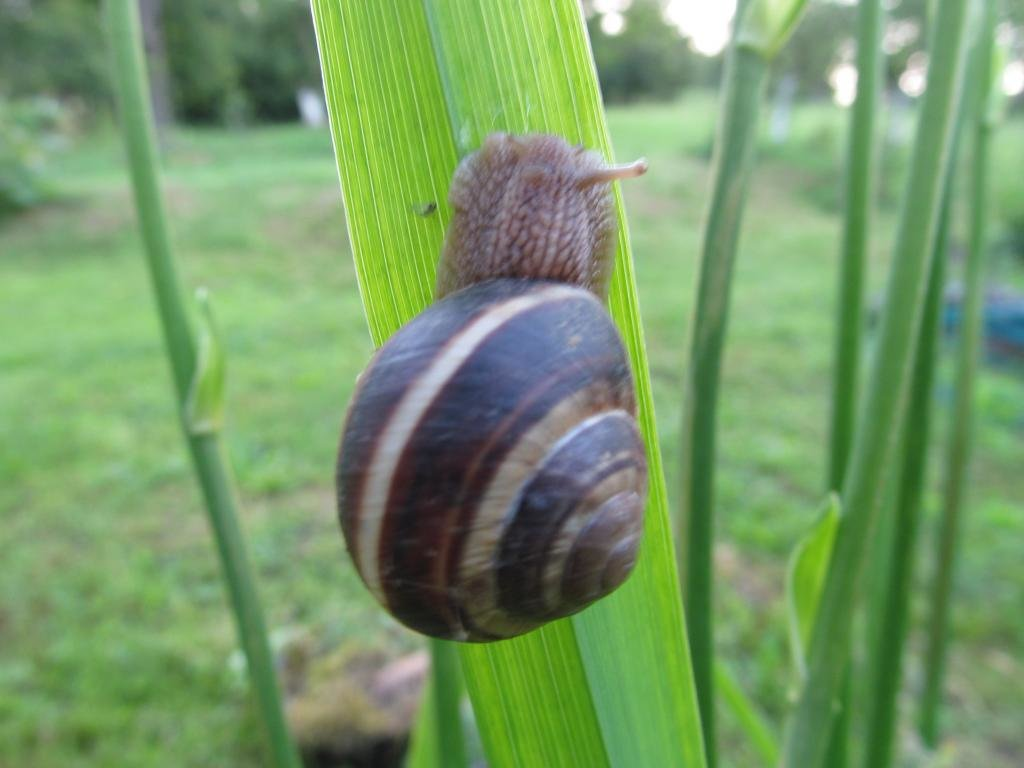 Free Snail high quality background ID:198945 for hd 1024x768 PC
