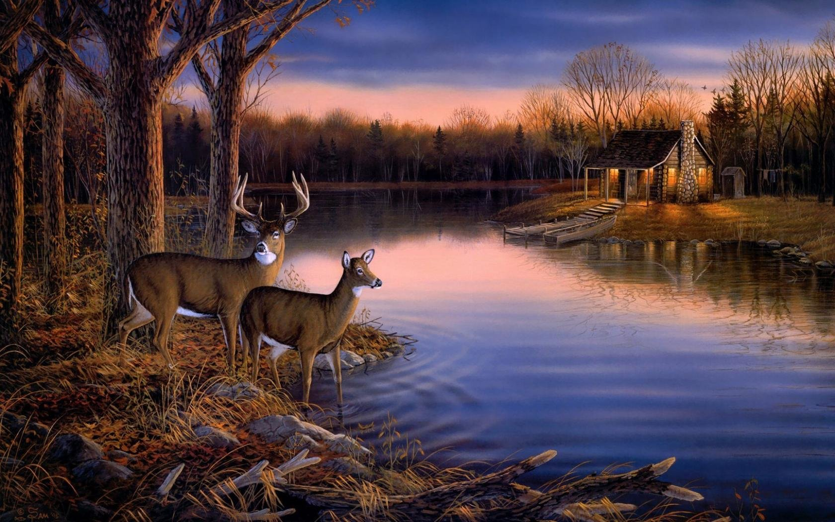 Free Deer high quality background ID:238438 for hd 1680x1050 PC