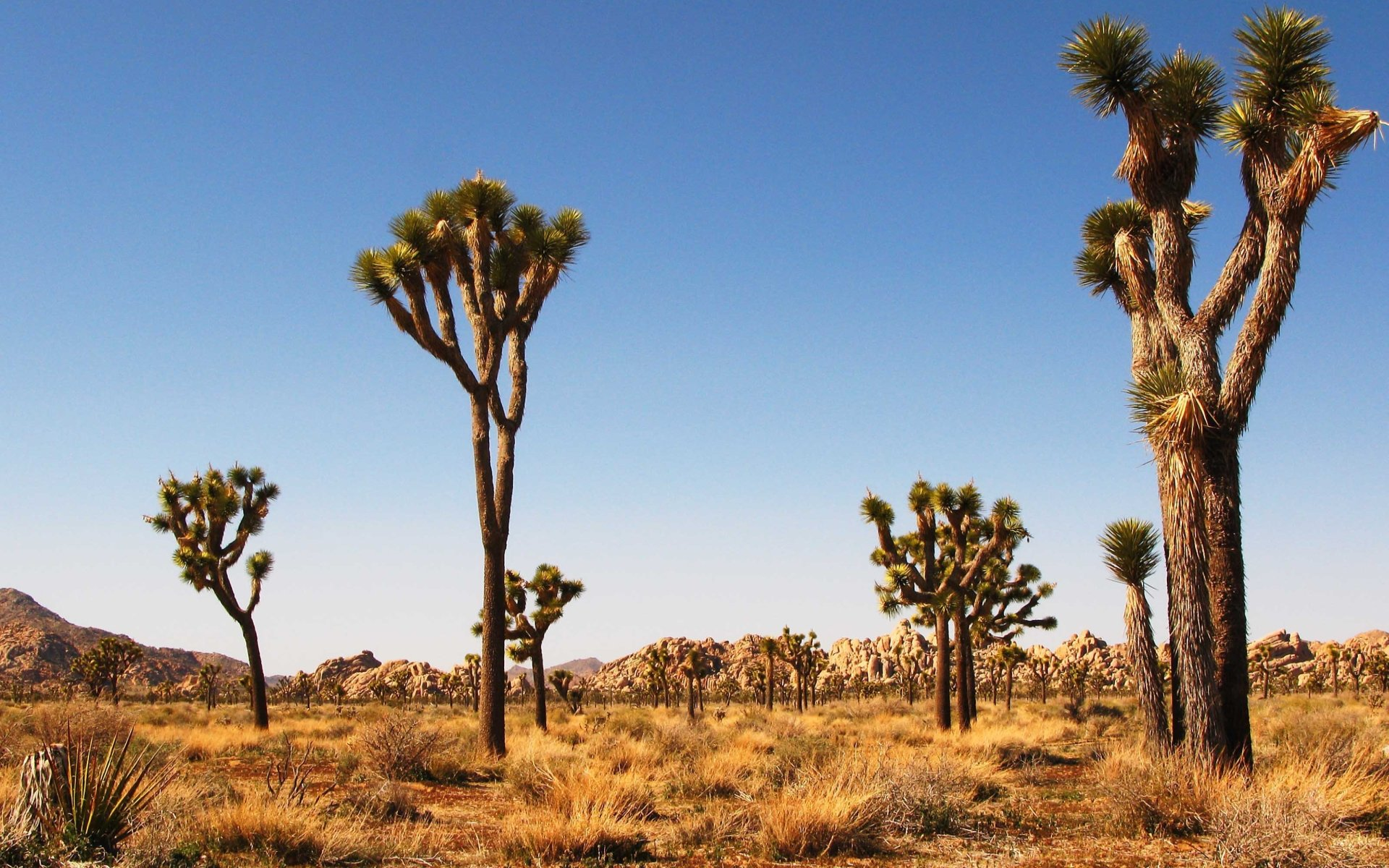 Download Hd 1920x1200 Joshua Tree National Park Desktop Background Id 254754 For Free