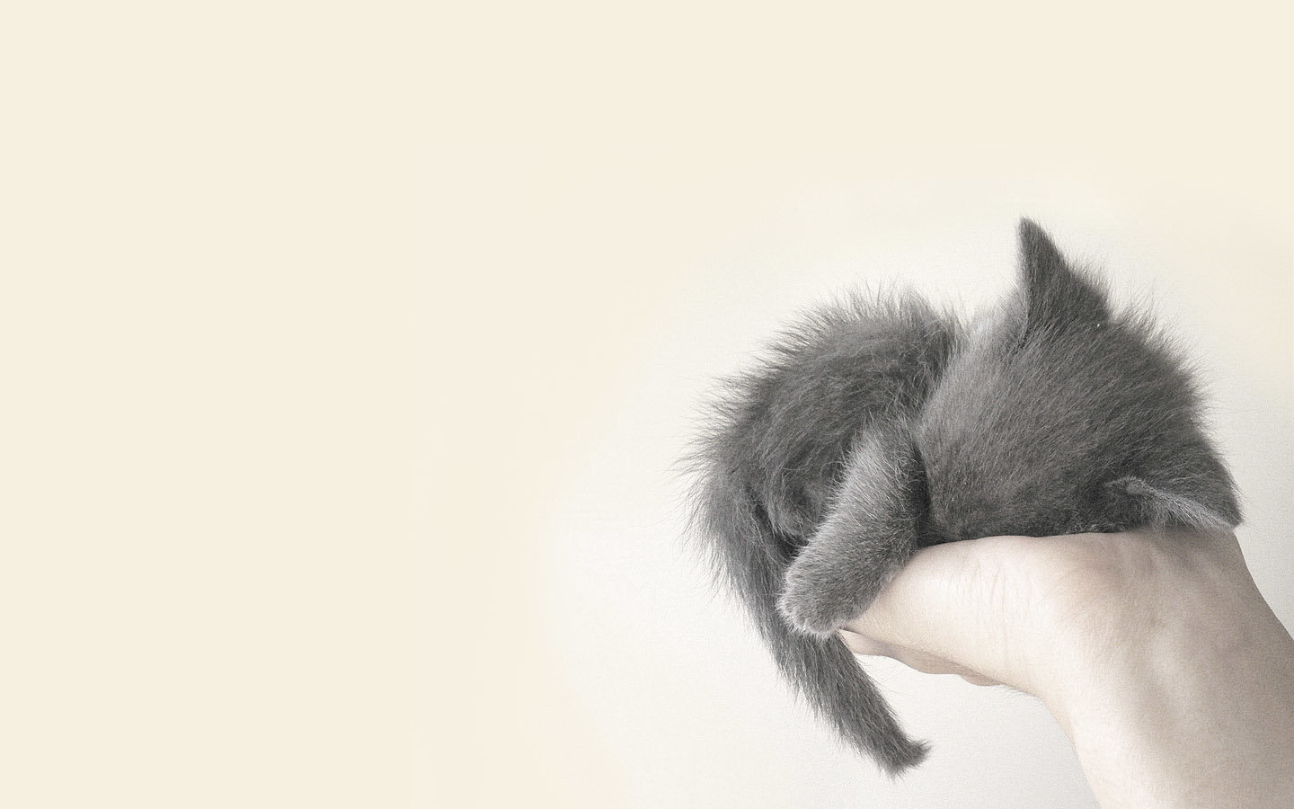 Free Kitten high quality wallpaper ID:429837 for hd 1440x900 PC