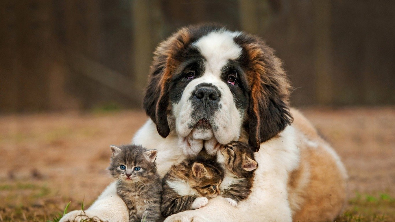 Free Cat and Dog high quality background ID:125327 for laptop computer