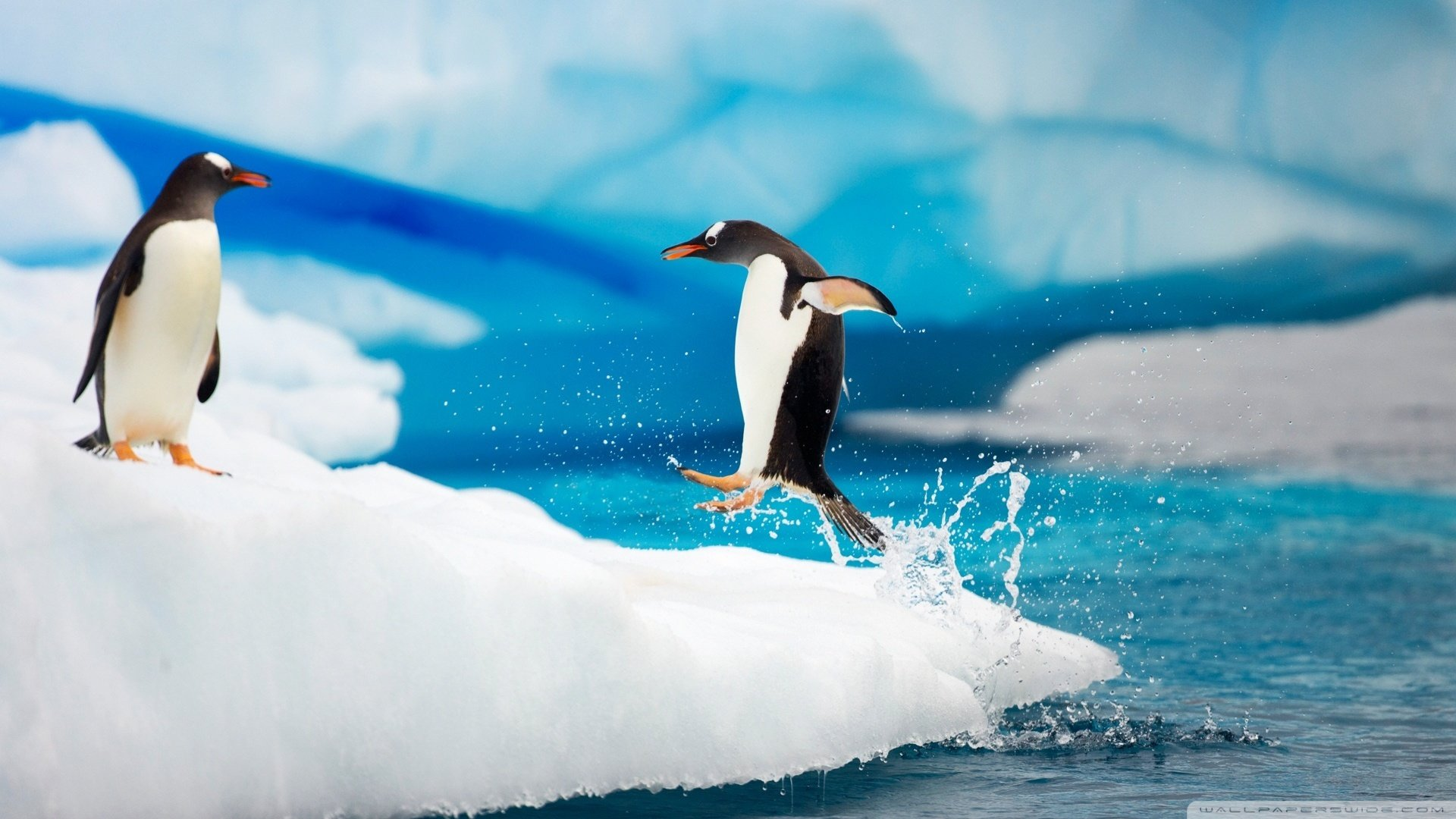 Free Penguin high quality wallpaper ID:149282 for full hd desktop