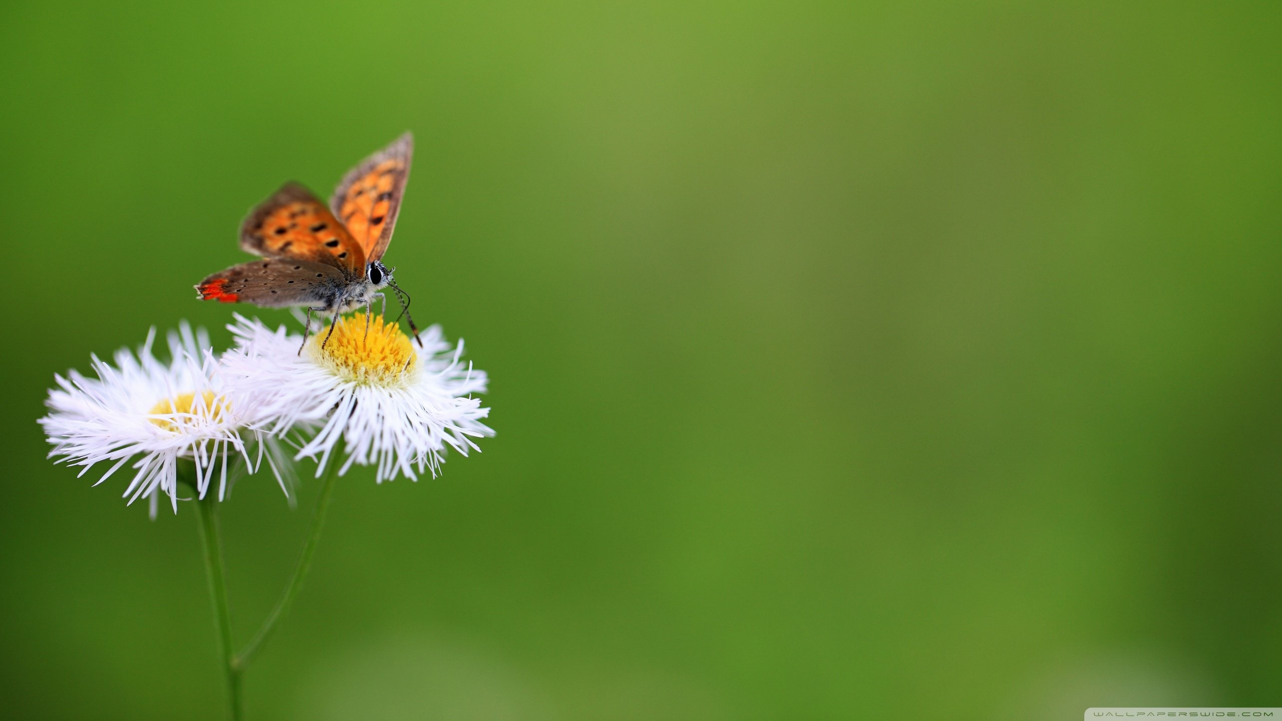 Download hd 2560x1440 Butterfly desktop background ID:168233 for free