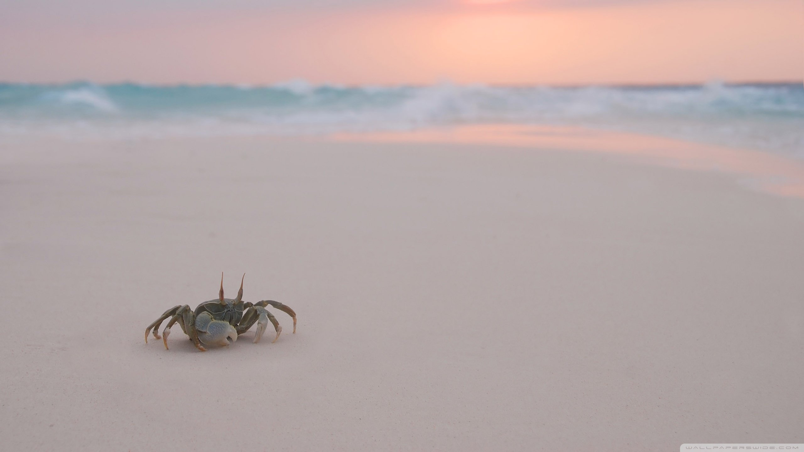 High resolution Crab hd 2560x1440 wallpaper ID:294295 for PC
