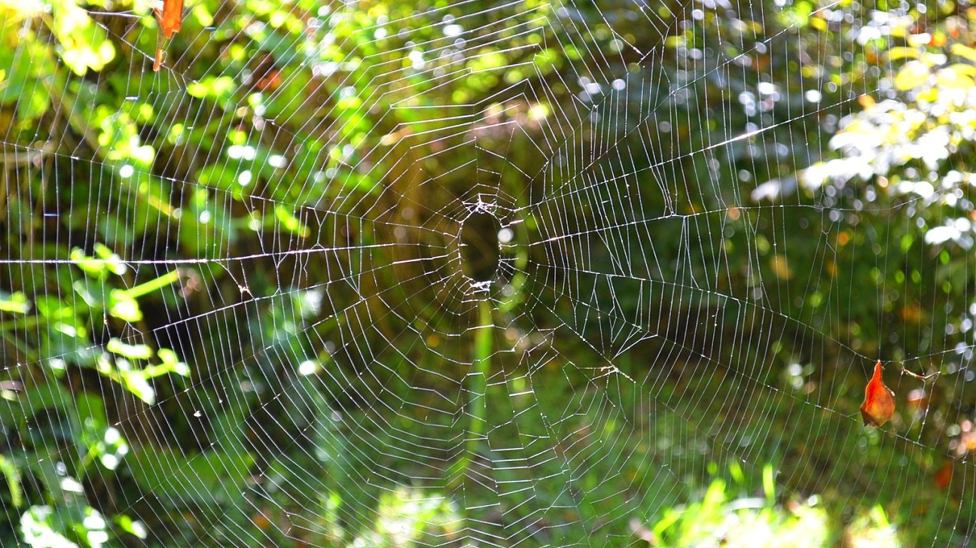 Free Spider Web high quality wallpaper ID:184728 for 1366x768 laptop desktop