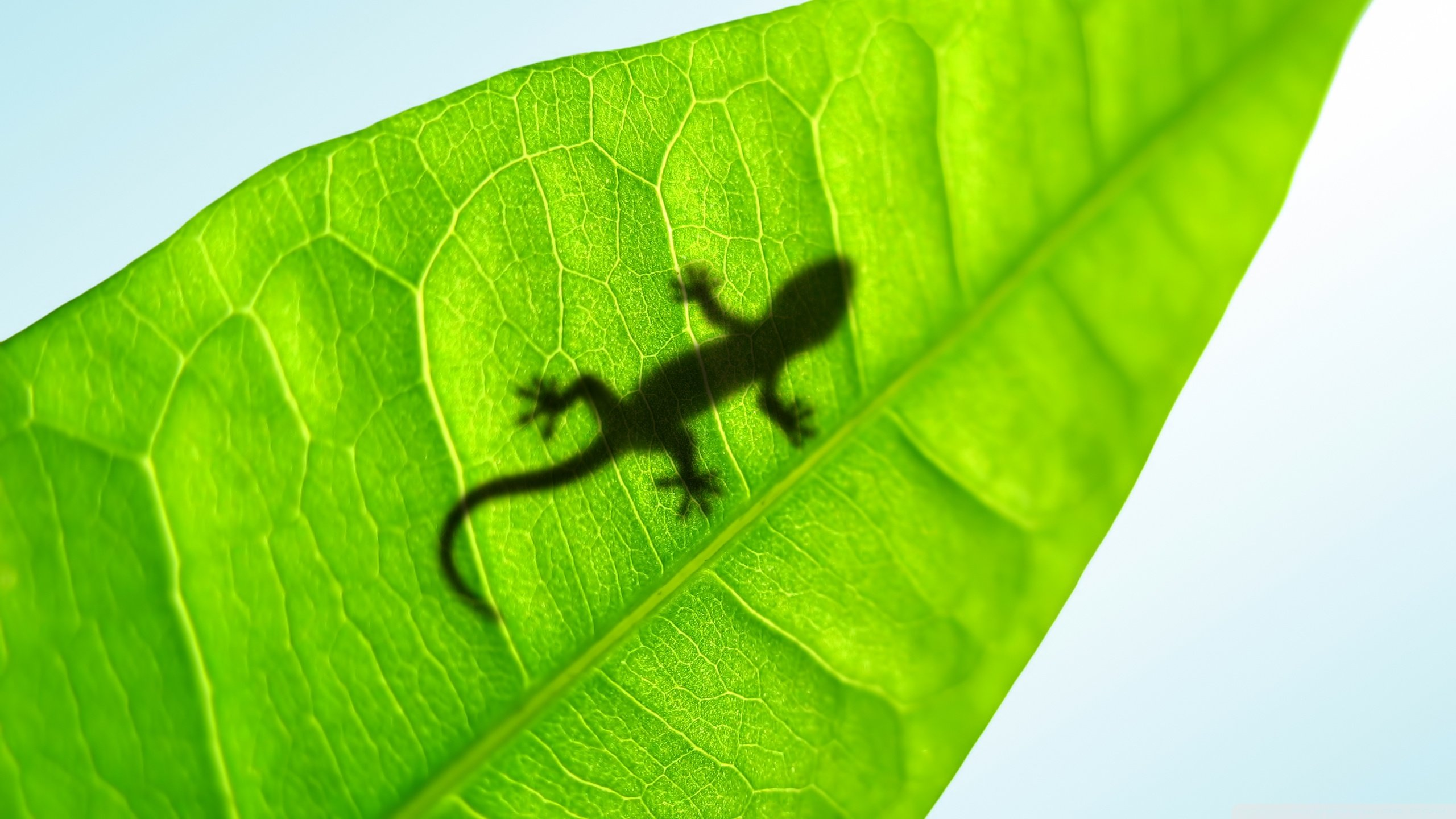 Free Gecko high quality wallpaper ID:114536 for hd 2560x1440 PC