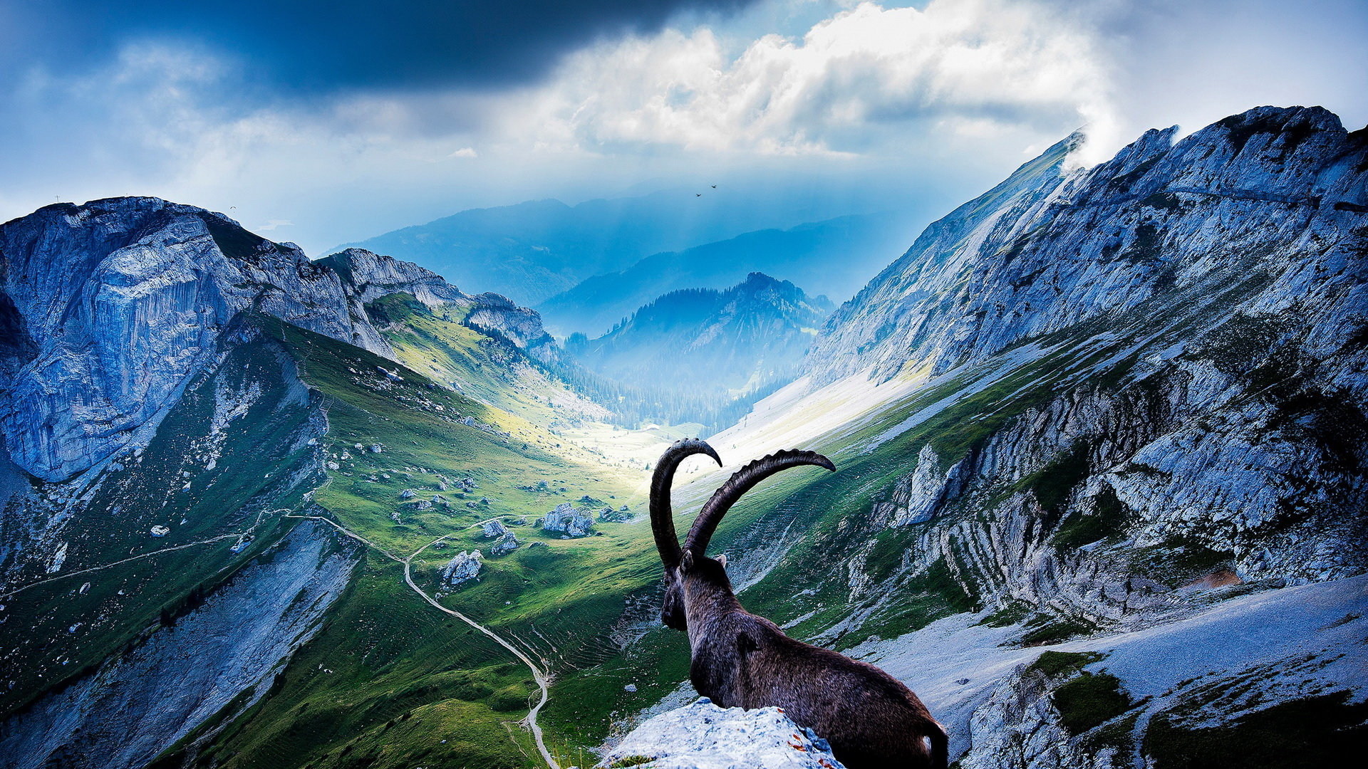 Download 1080p Goat desktop background ID:466783 for free