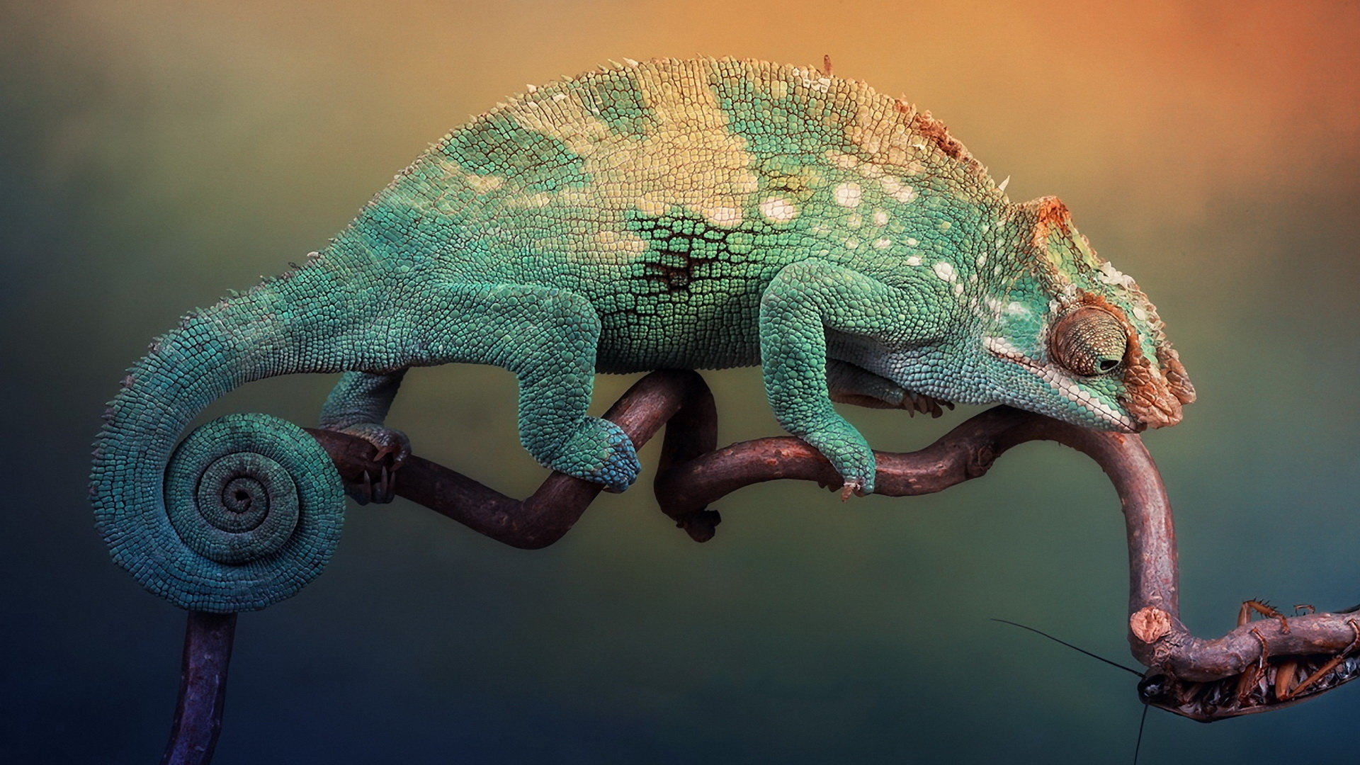 Awesome Chameleon free background ID:462531 for hd 1920x1080 desktop