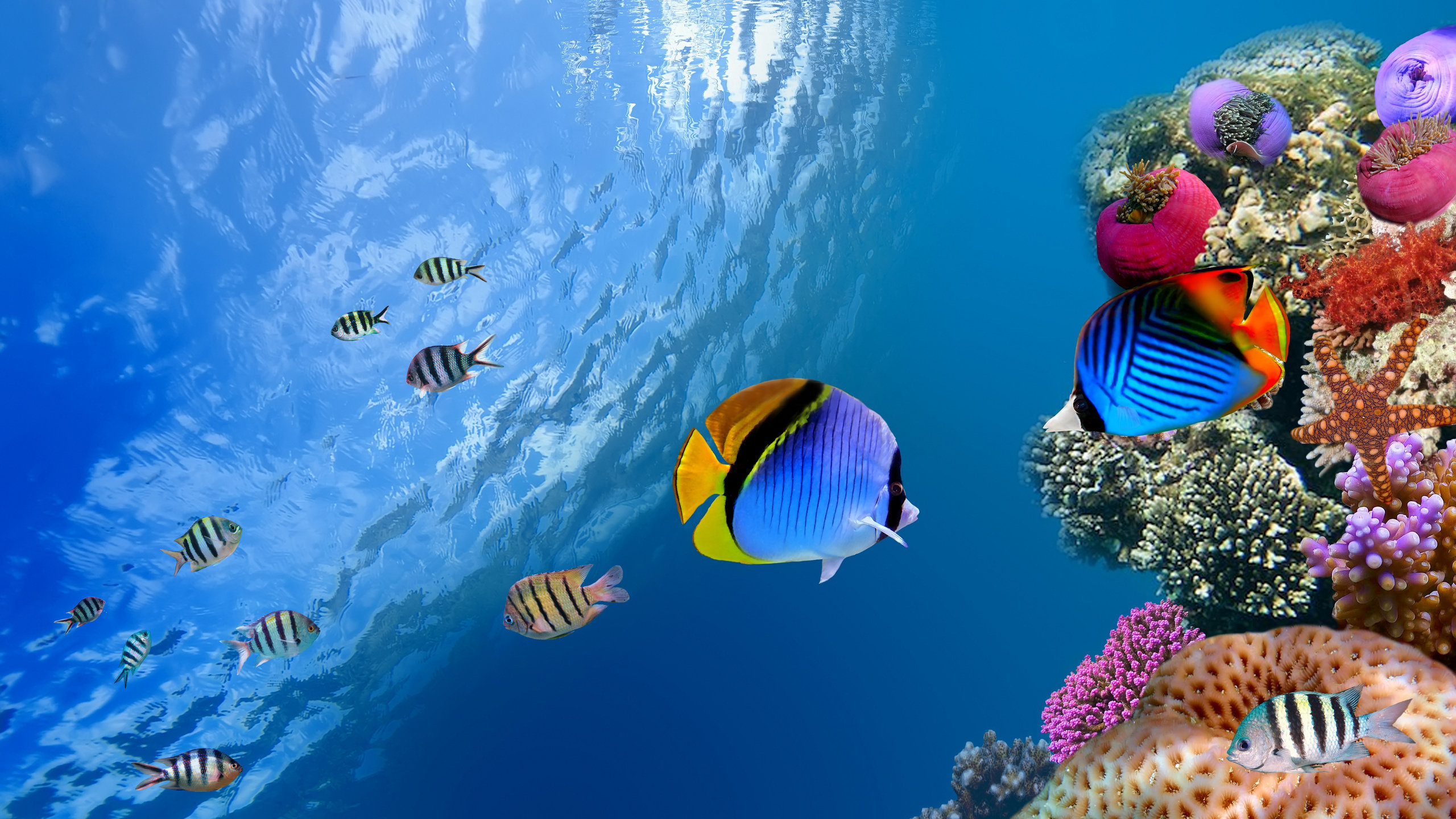 Free download Fish background ID:66067 hd 2560x1440 for computer