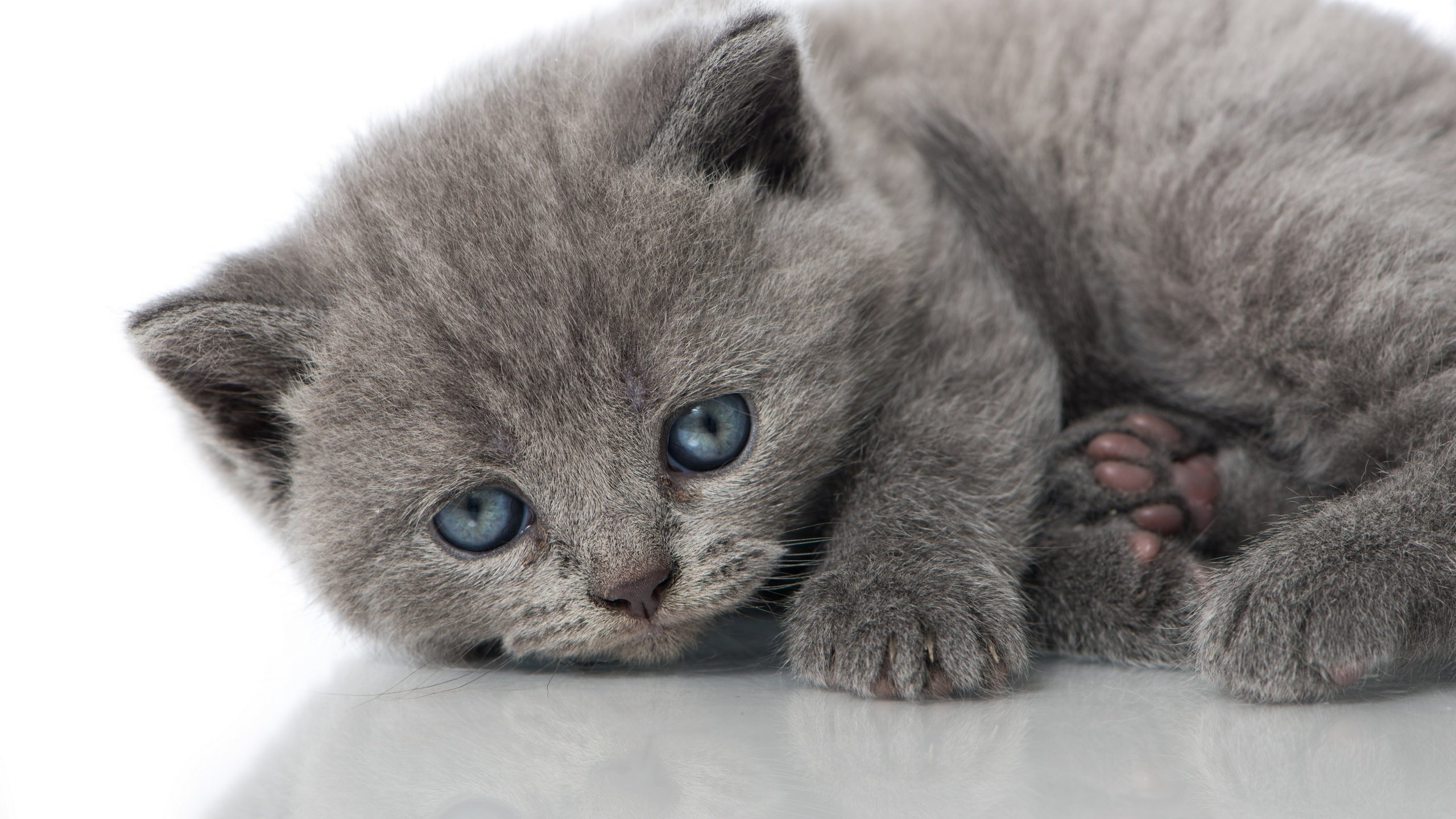 Download hd 2560x1440 Kitten computer background ID:427815 for free