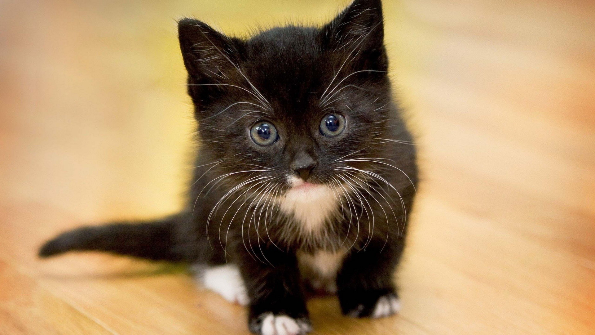 Awesome Kitten free wallpaper ID:427814 for full hd 1080p PC