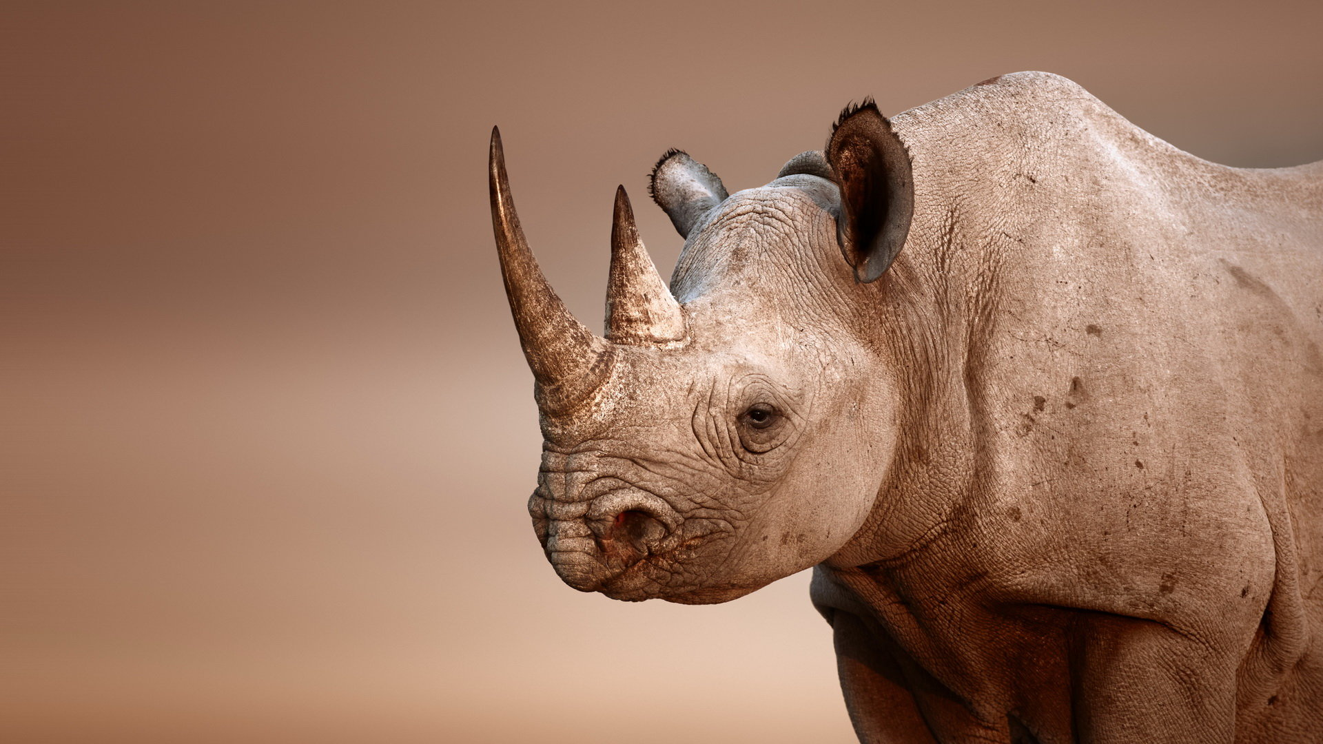 High resolution Rhino full hd 1920x1080 wallpaper ID:20112 for computer