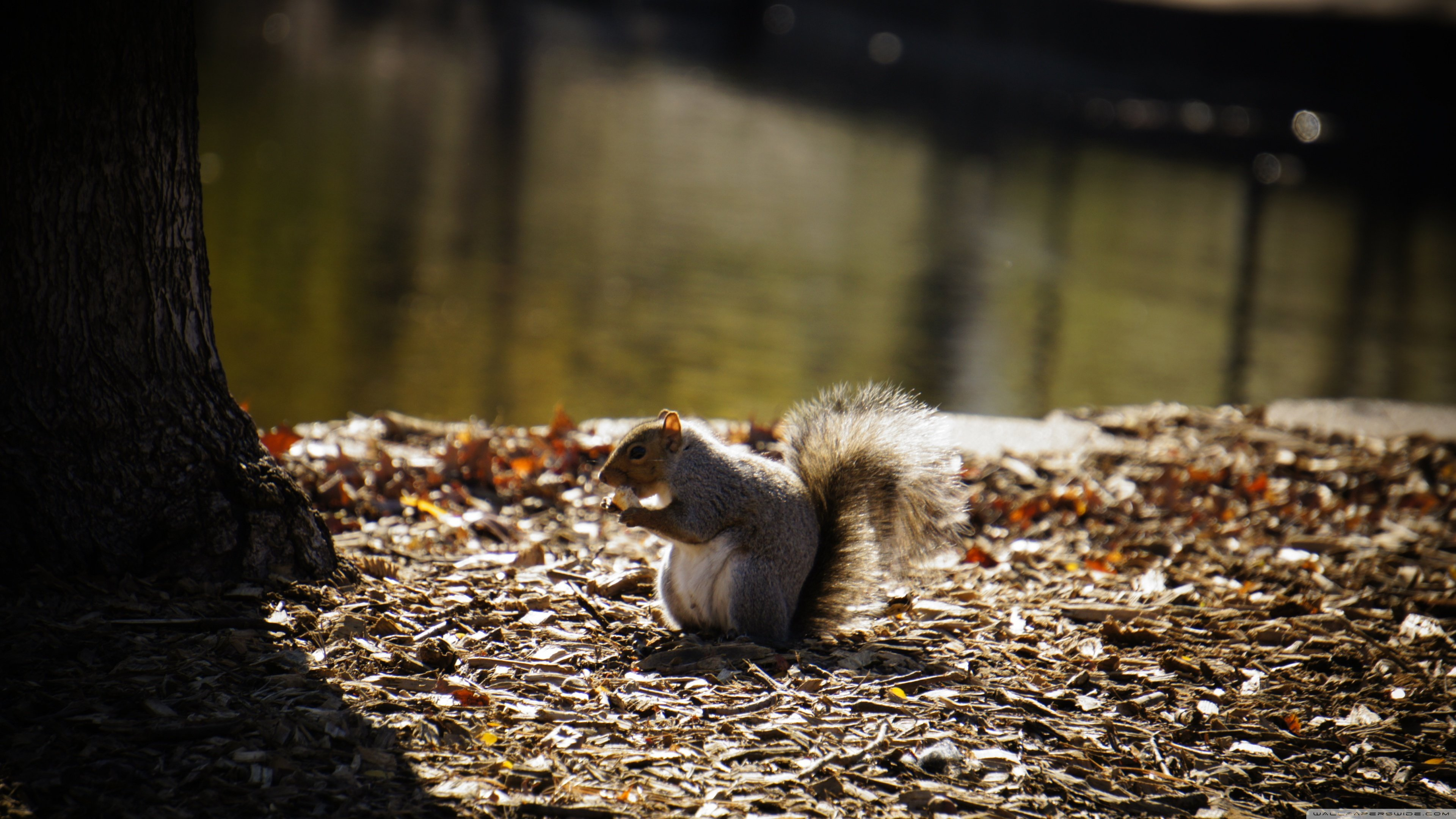 Best Squirrel wallpaper ID:311675 for High Resolution 4k computer