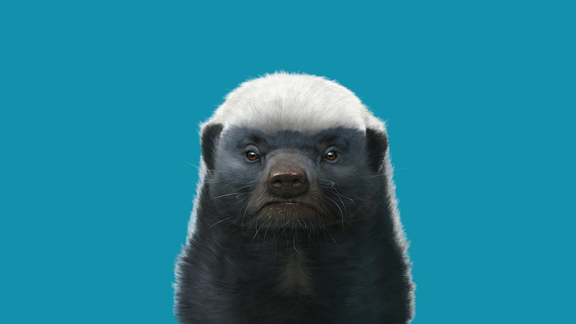Free Honey Badger high quality background ID:85268 for full hd 1080p desktop