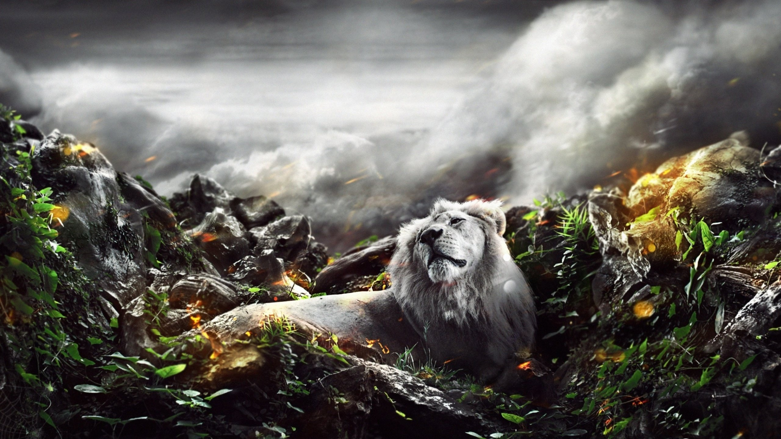 Free download Lion background ID:255276 hd 2560x1440 for computer