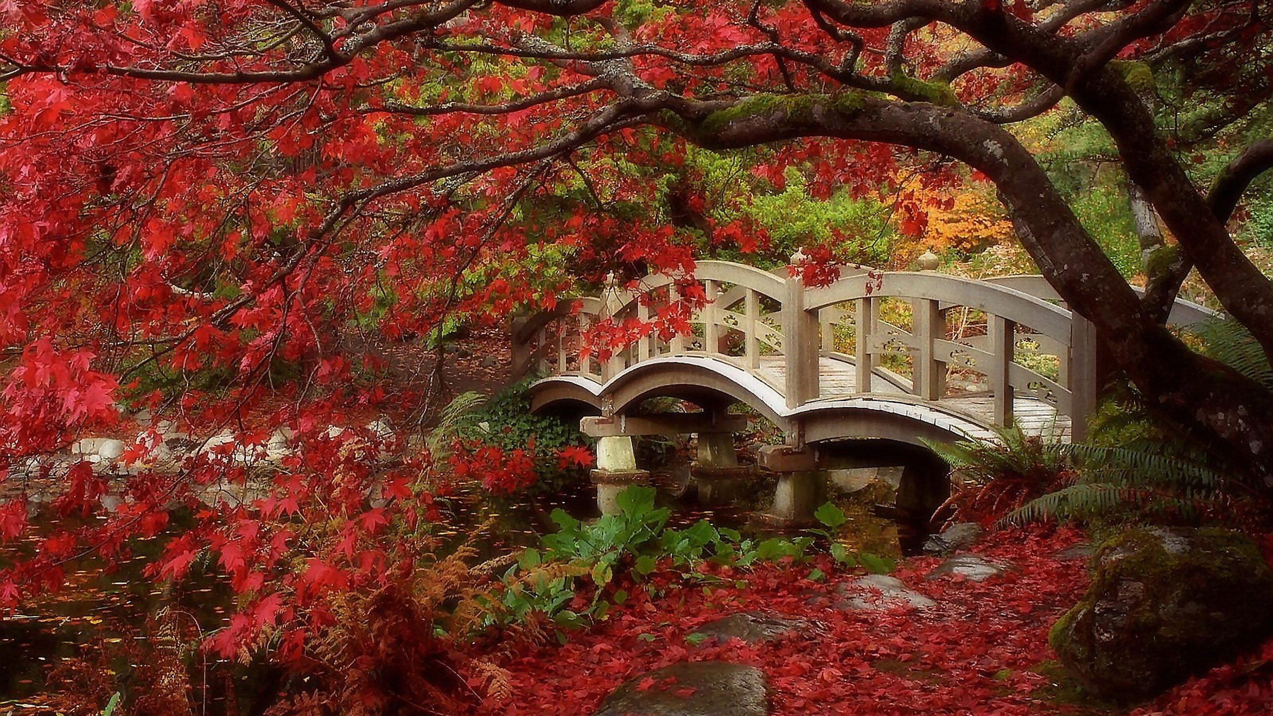 Best Japanese Garden Wallpaper ID92632 For High Resolution Hd 2560x1440 PC