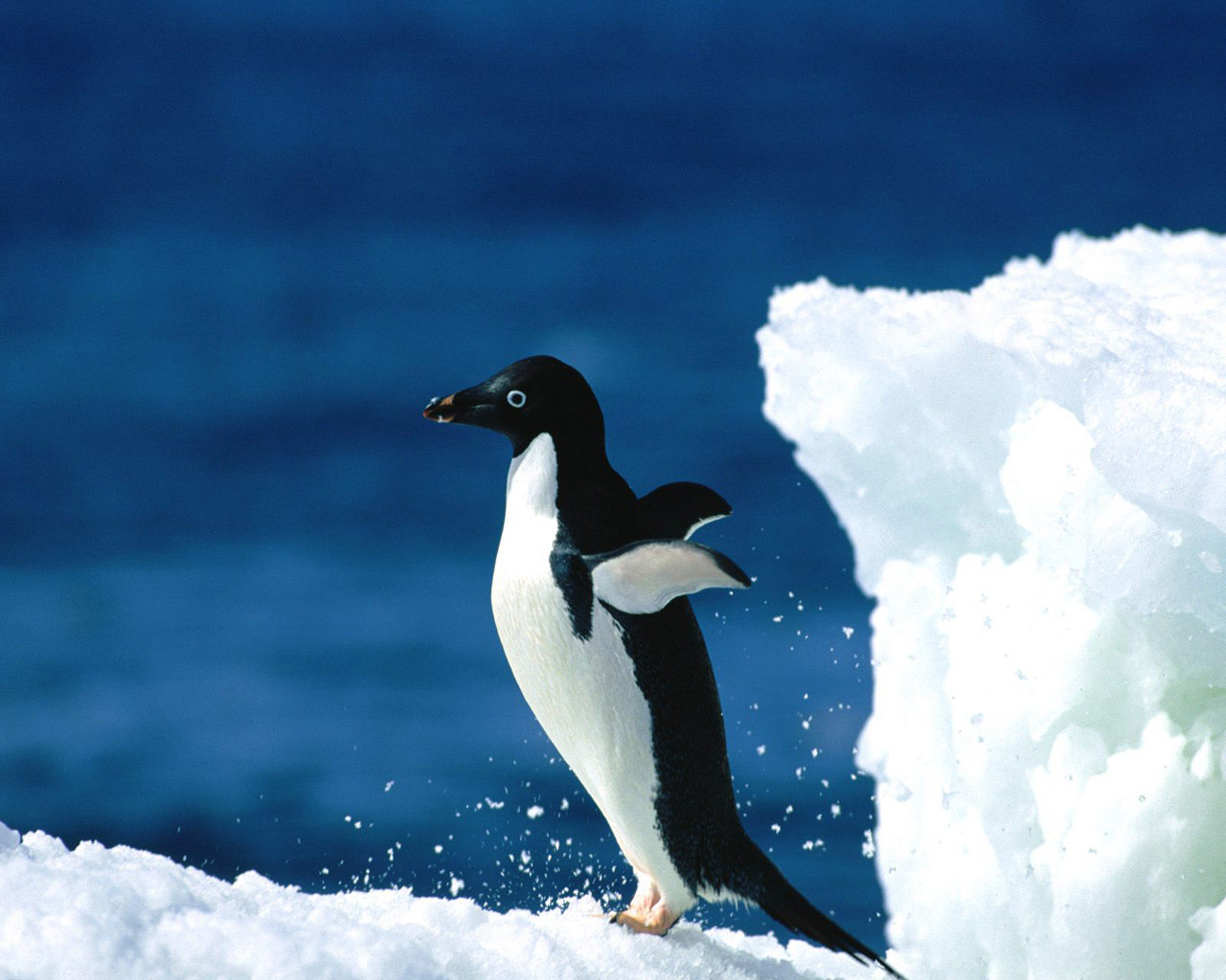 Awesome Penguin free wallpaper ID:149229 for hd 1280x1024 desktop