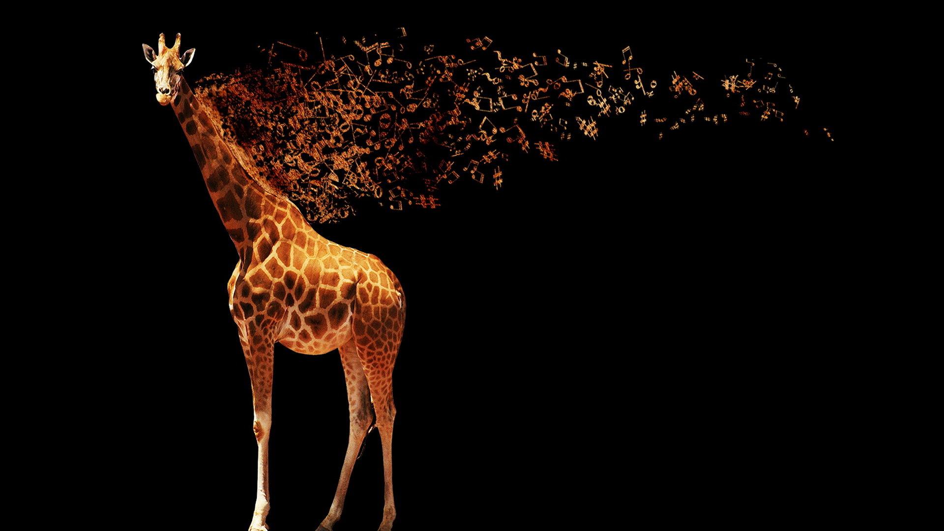 Fondos De Pantalla De Jirafas: Giraffe Wallpapers 1920x1080 Full HD (1080p) Desktop