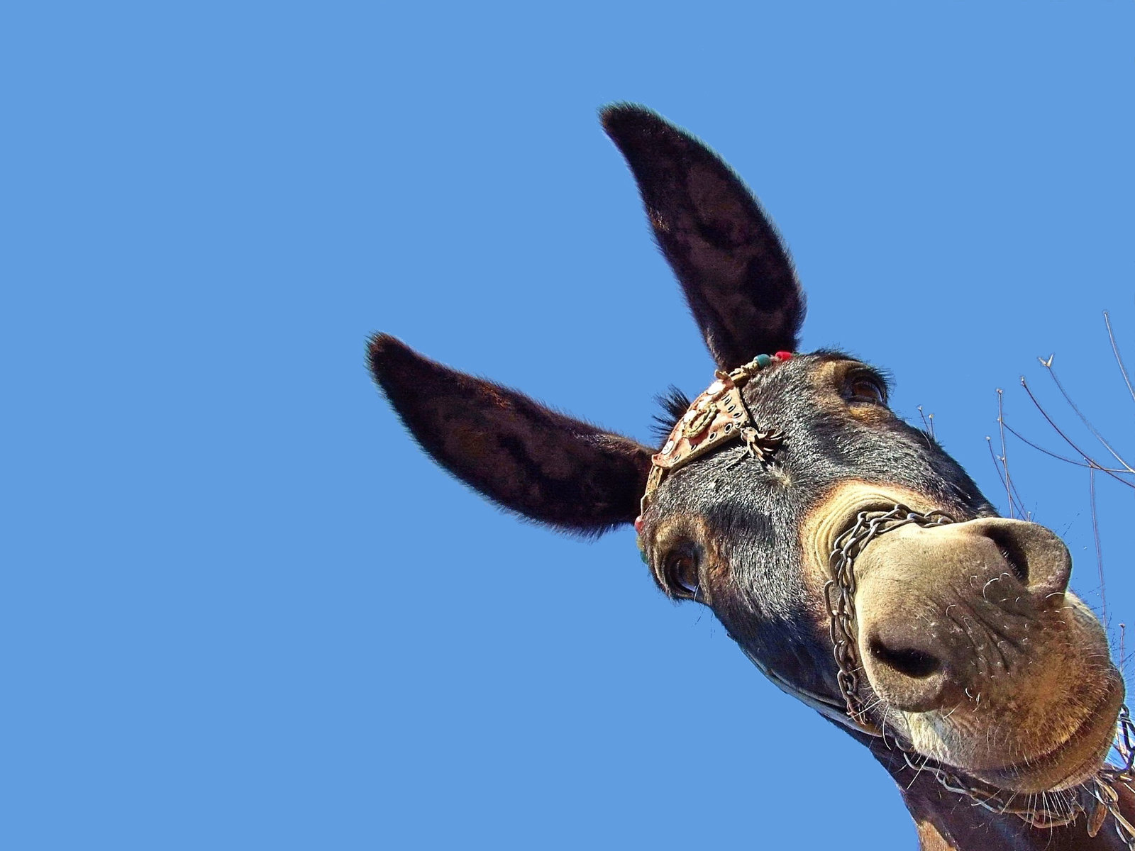 High resolution Donkey hd 1600x1200 wallpaper ID:194063 for PC