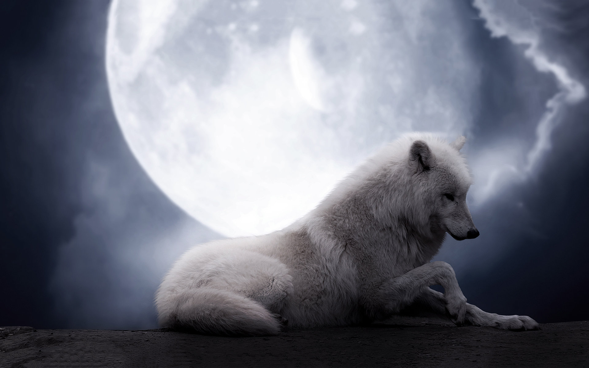Free White Wolf high quality wallpaper ID:117753 for hd 1920x1200 desktop