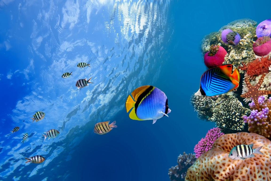 Free Coral reef high quality background ID:66257 for hd 1152x768 desktop