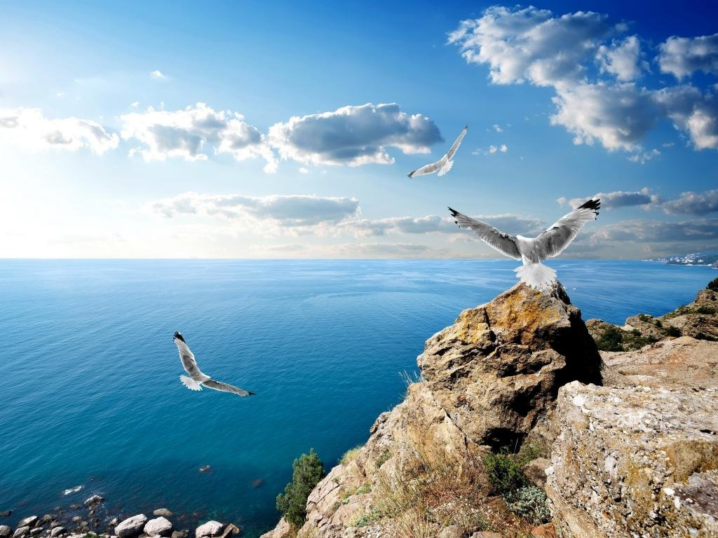 Free Seagull high quality wallpaper ID:66845 for hd 1024x768 PC