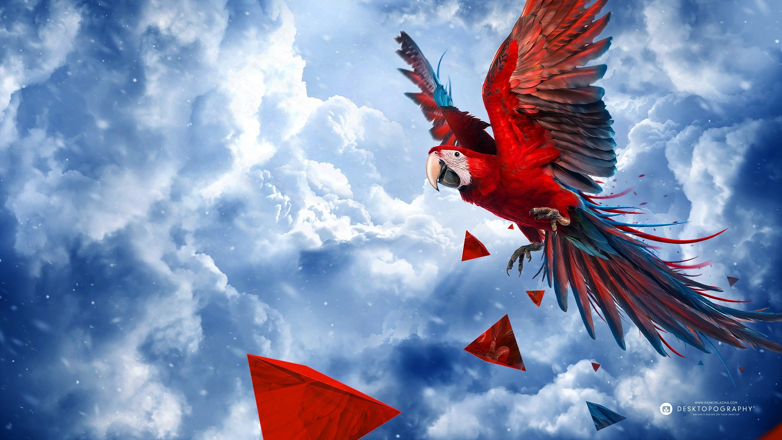 Download hd 2560x1440 Macaw desktop background ID:46377 for free