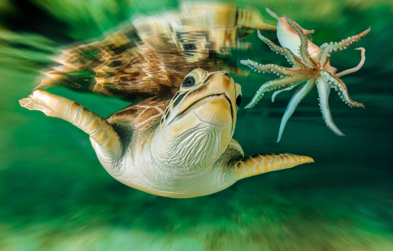 Free download Turtle background ID:29889 hd 1600x1024 for desktop