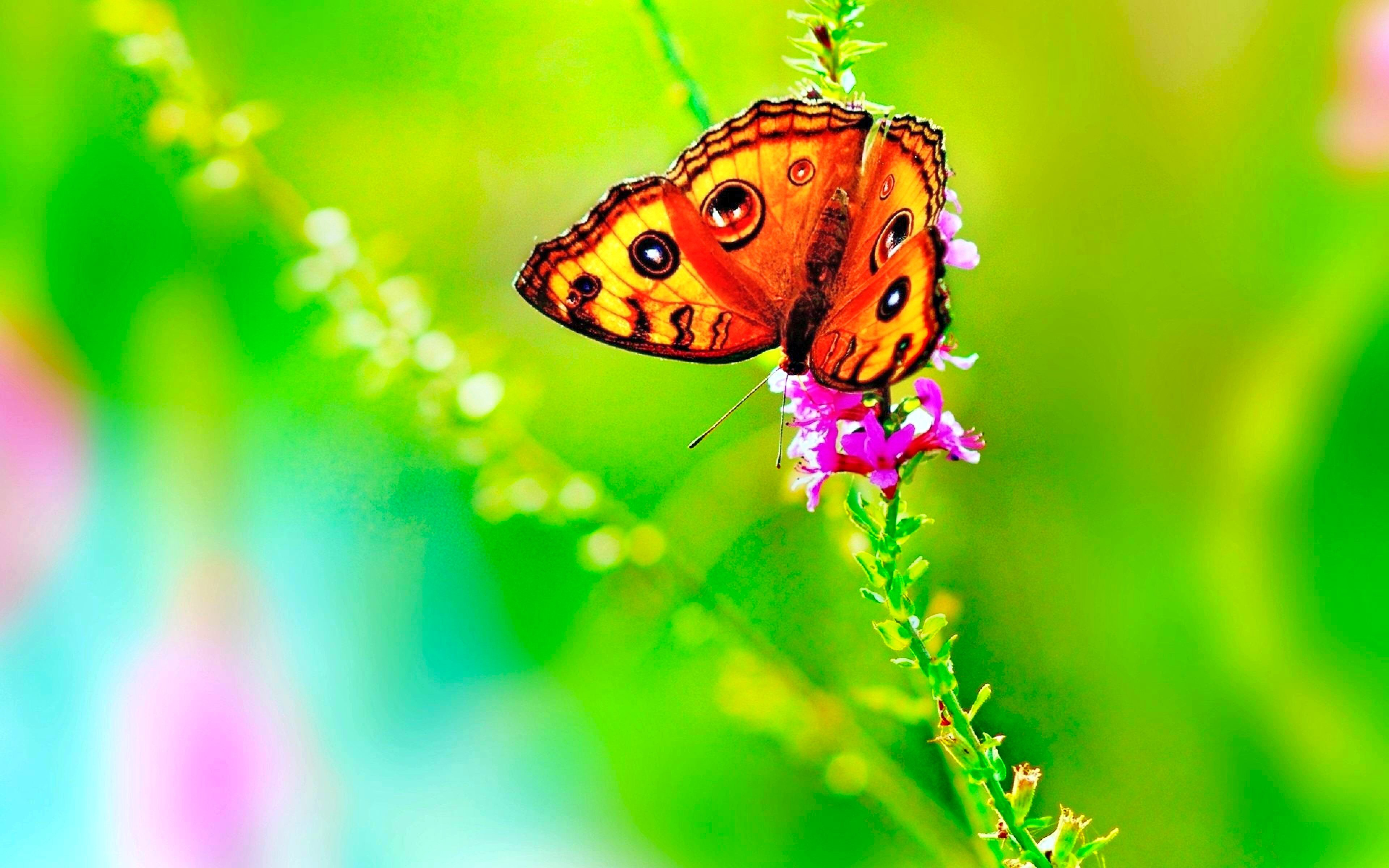 Download hd 3840x2400 Butterfly PC wallpaper ID:167497 for free
