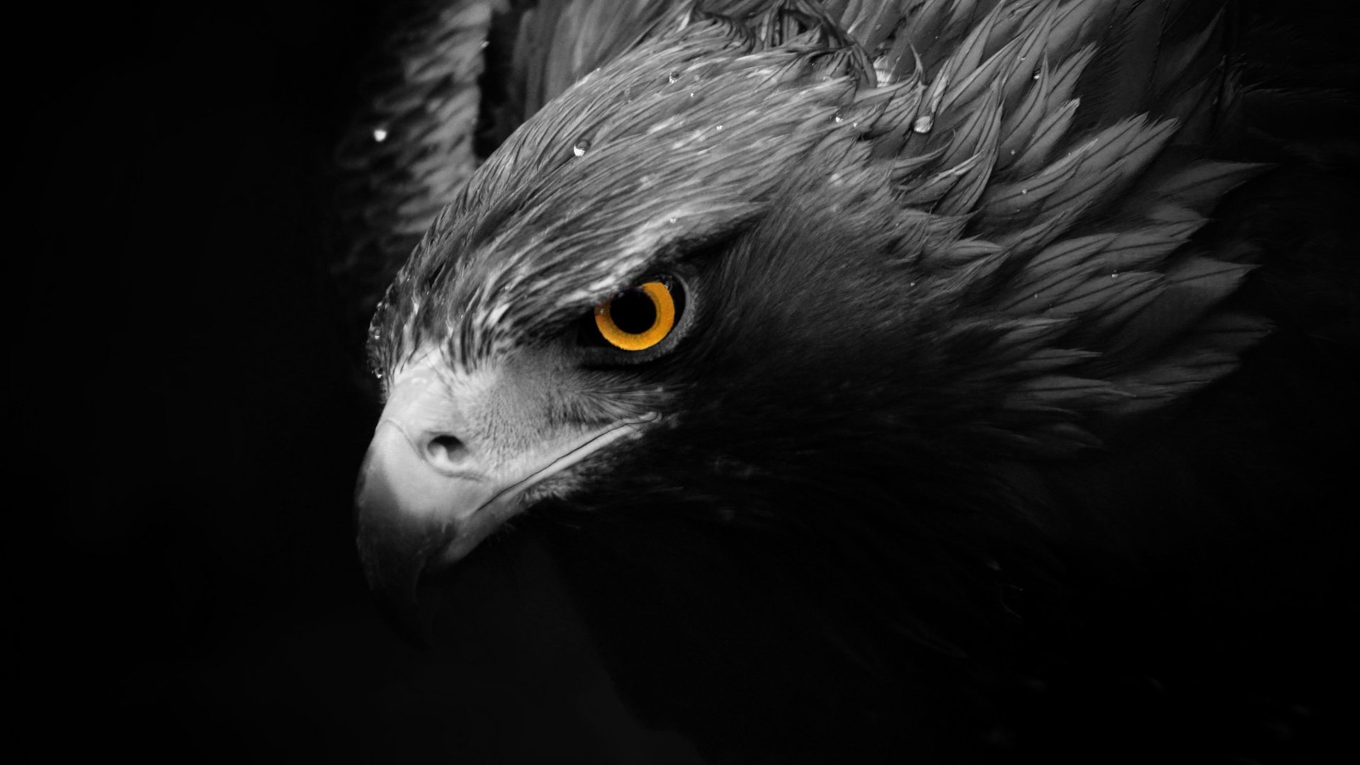 Free Download Eagle Wallpaper ID:231161 1080p For Desktop