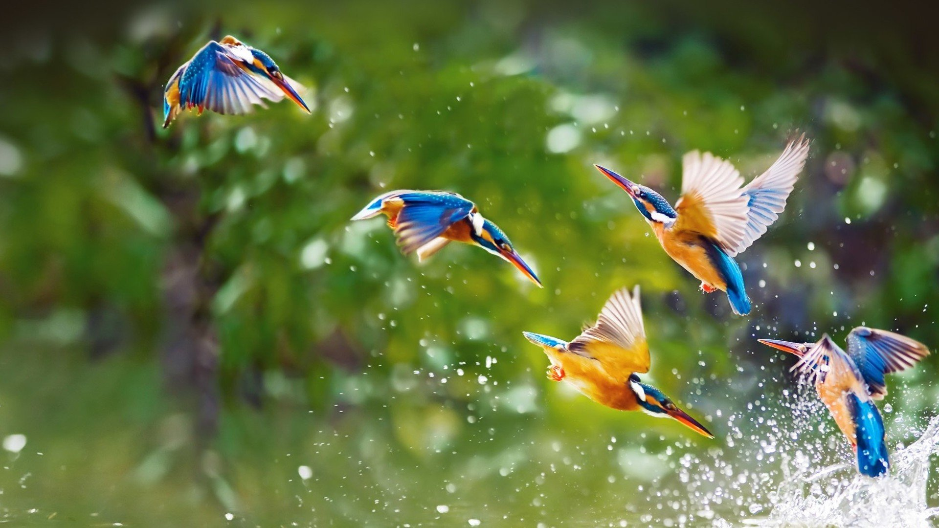 Best Kingfisher background ID:311297 for High Resolution hd 1080p desktop