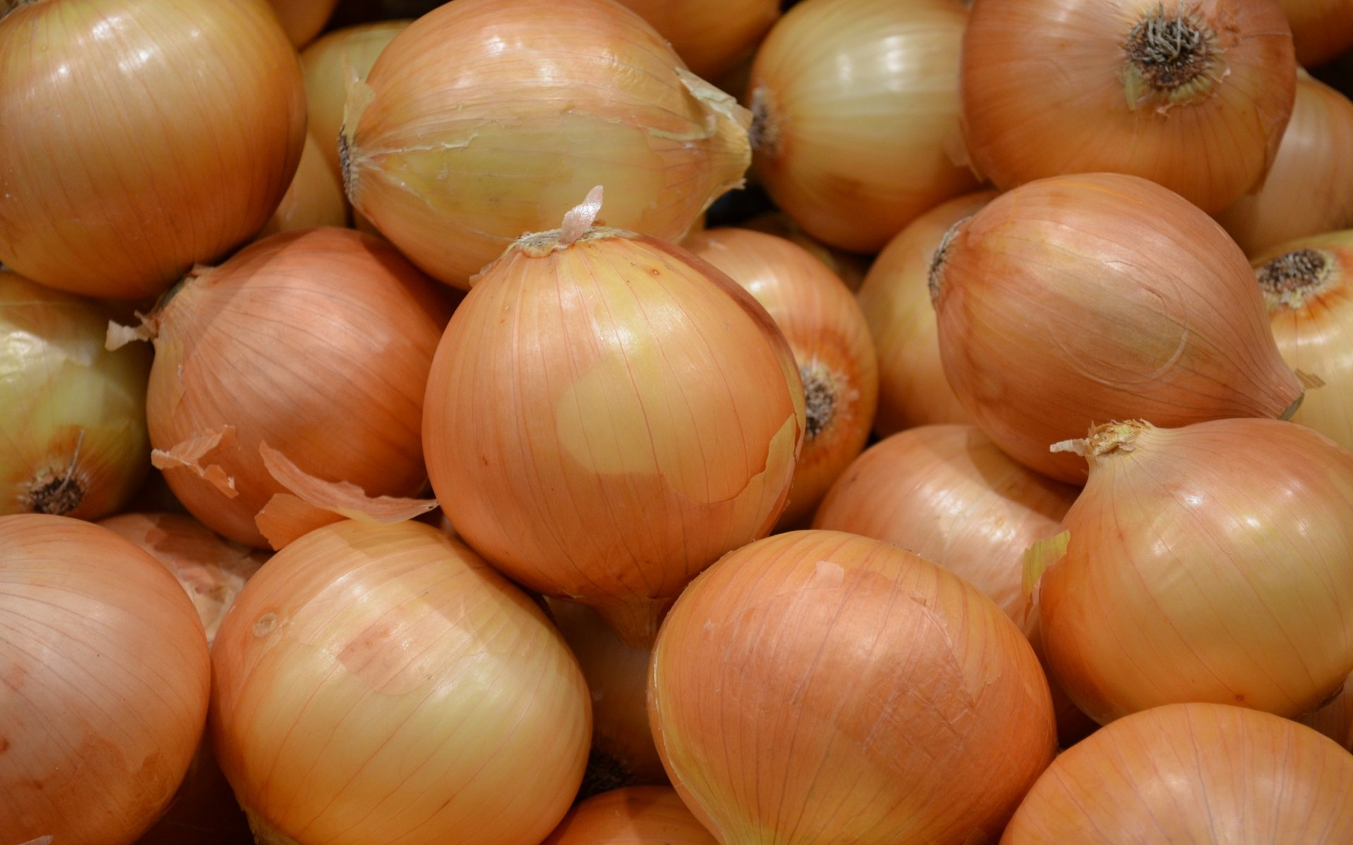 Awesome Onion free wallpaper ID:457698 for hd 1920x1200 desktop