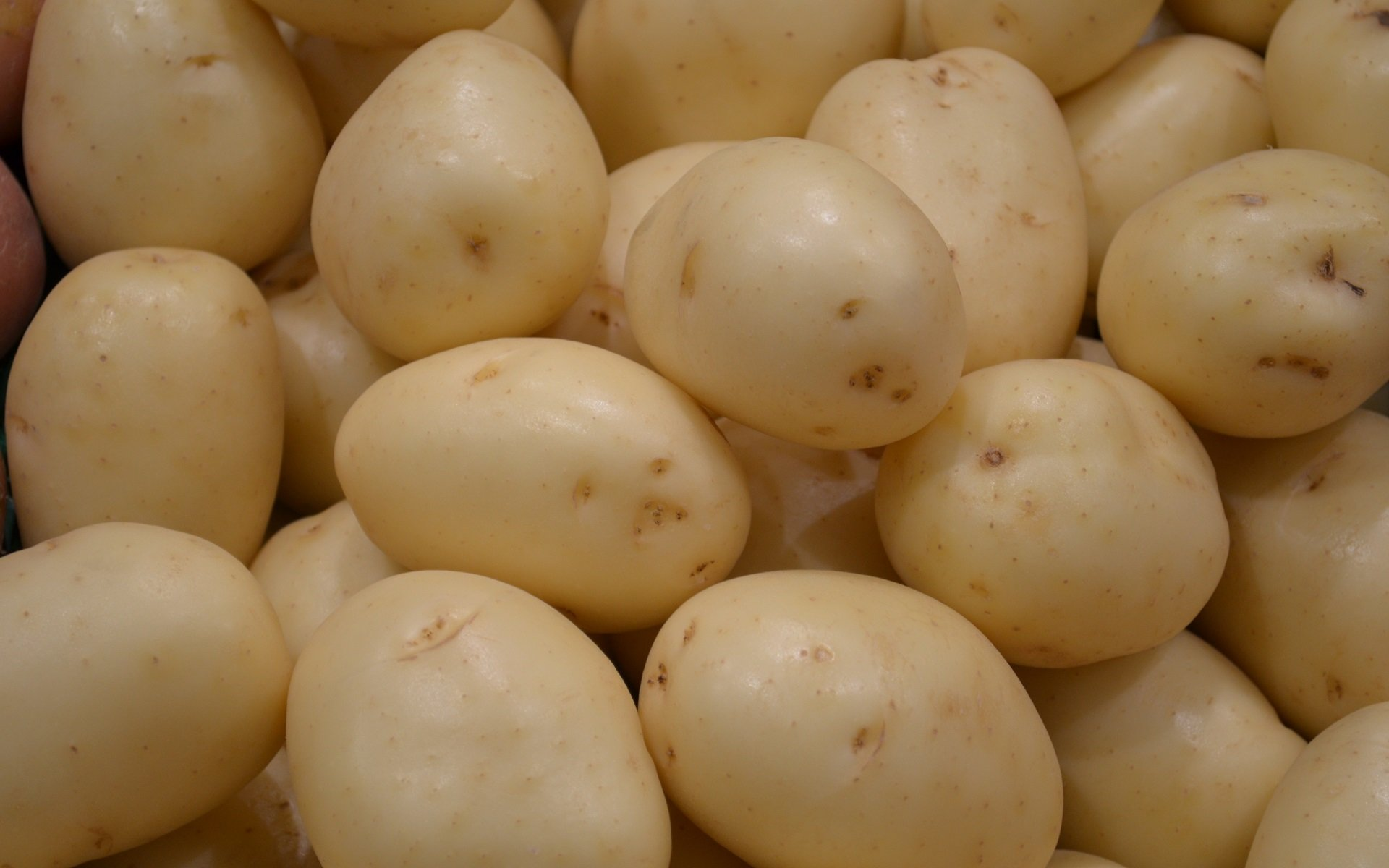 High resolution Potato hd 1920x1200 background ID:315043 for PC