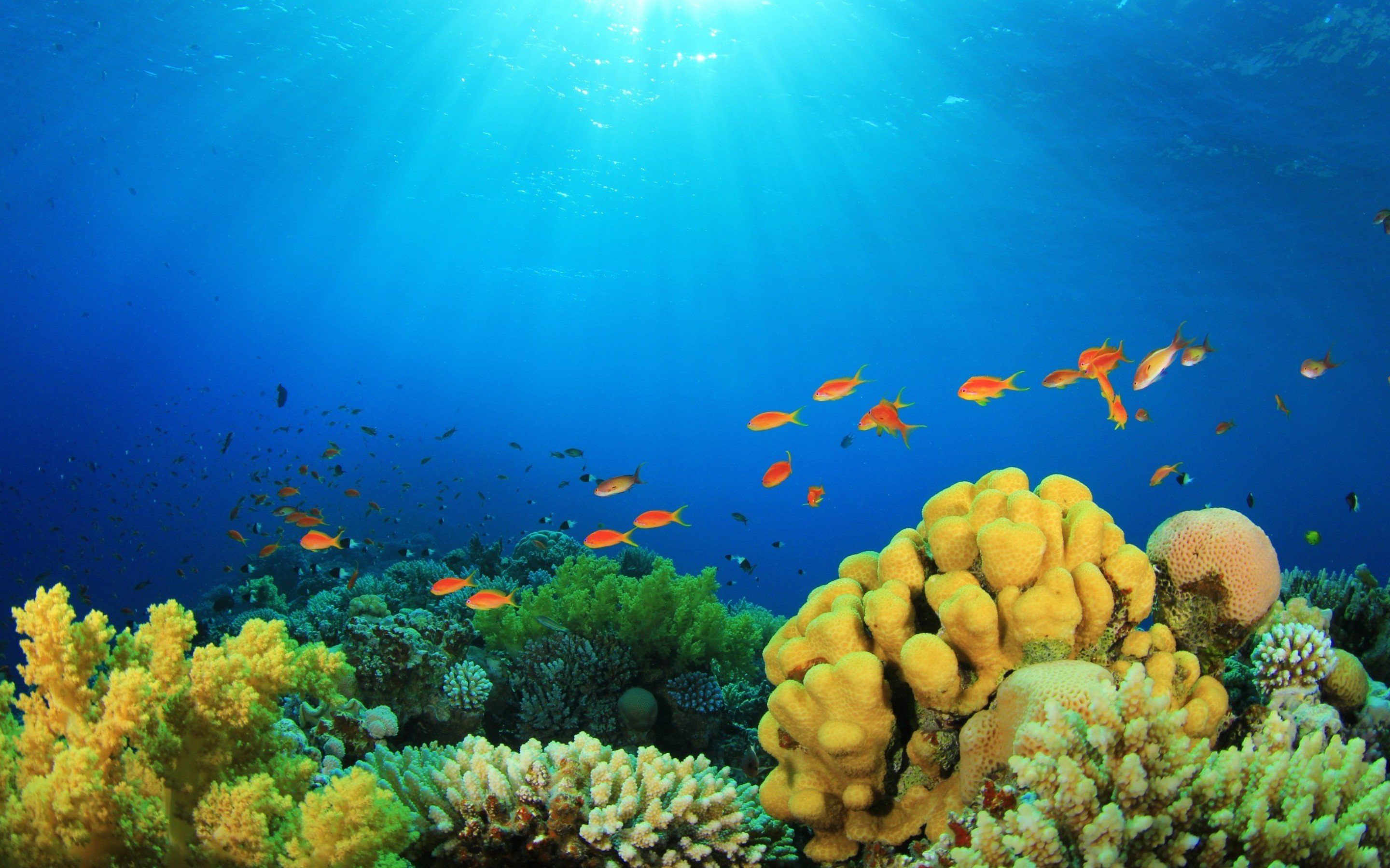 Underwater wallpapers hd for desktop backgrounds - Underwater desktop background ...