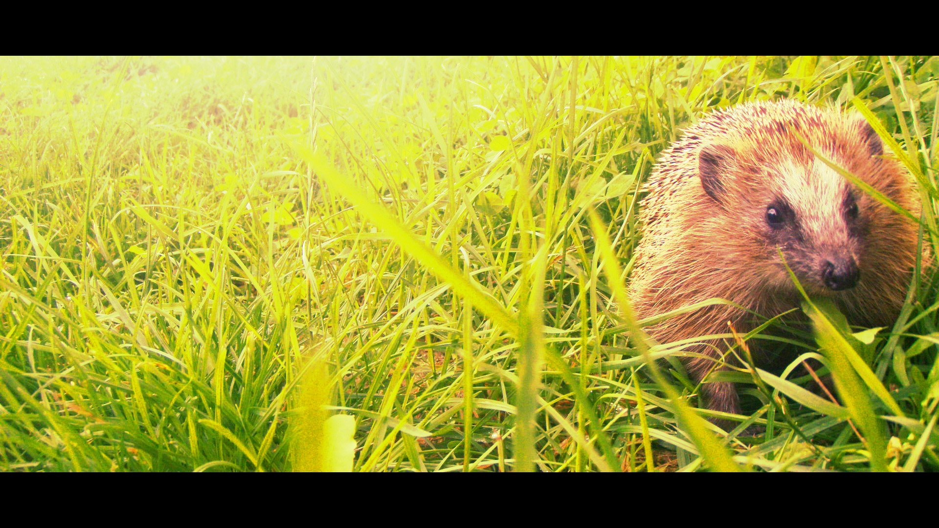 Best Hedgehog background ID:241853 for High Resolution full hd 1920x1080 PC