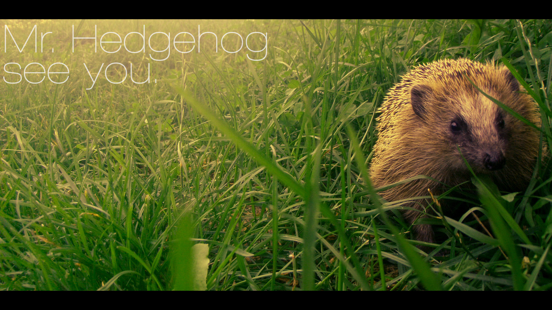Awesome Hedgehog free background ID:241870 for full hd PC