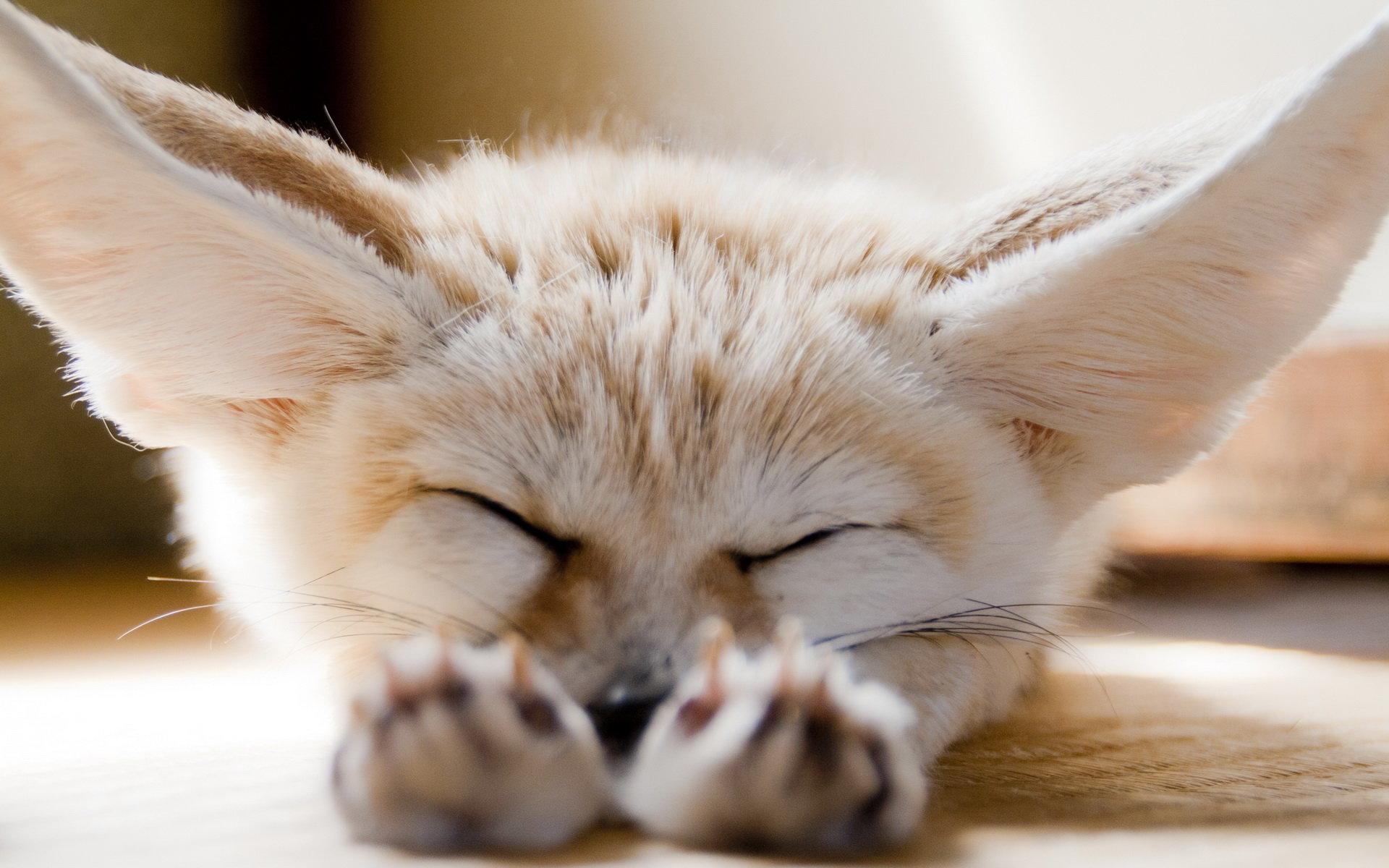 Free Fennec Fox high quality wallpaper ID:137661 for hd 1920x1200 computer