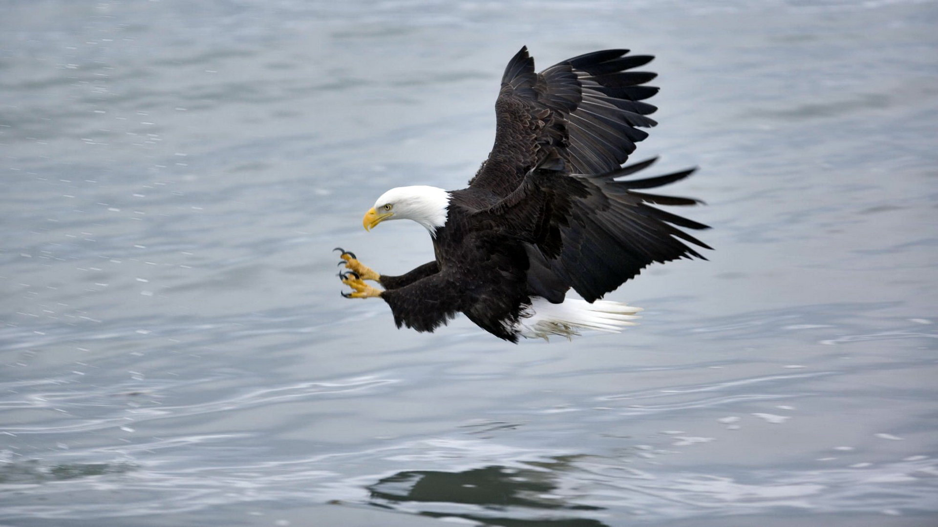Awesome American Bald Eagle free background ID:68650 for full hd 1080p desktop