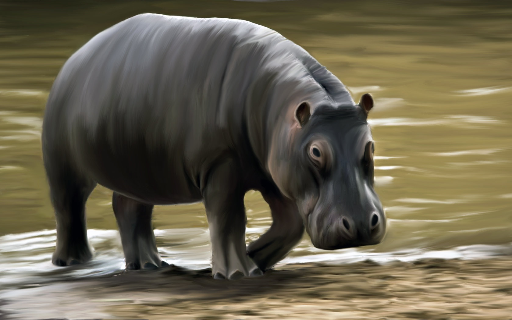 Best Hippo background ID:28829 for High Resolution hd 1680x1050 PC