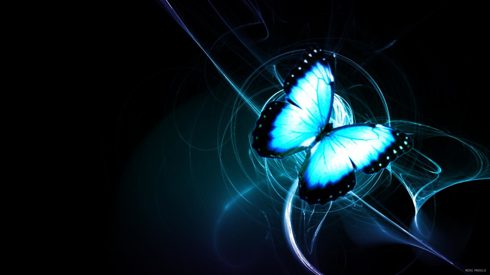 High resolution Butterfly hd 1600x900 background ID:167948 for desktop