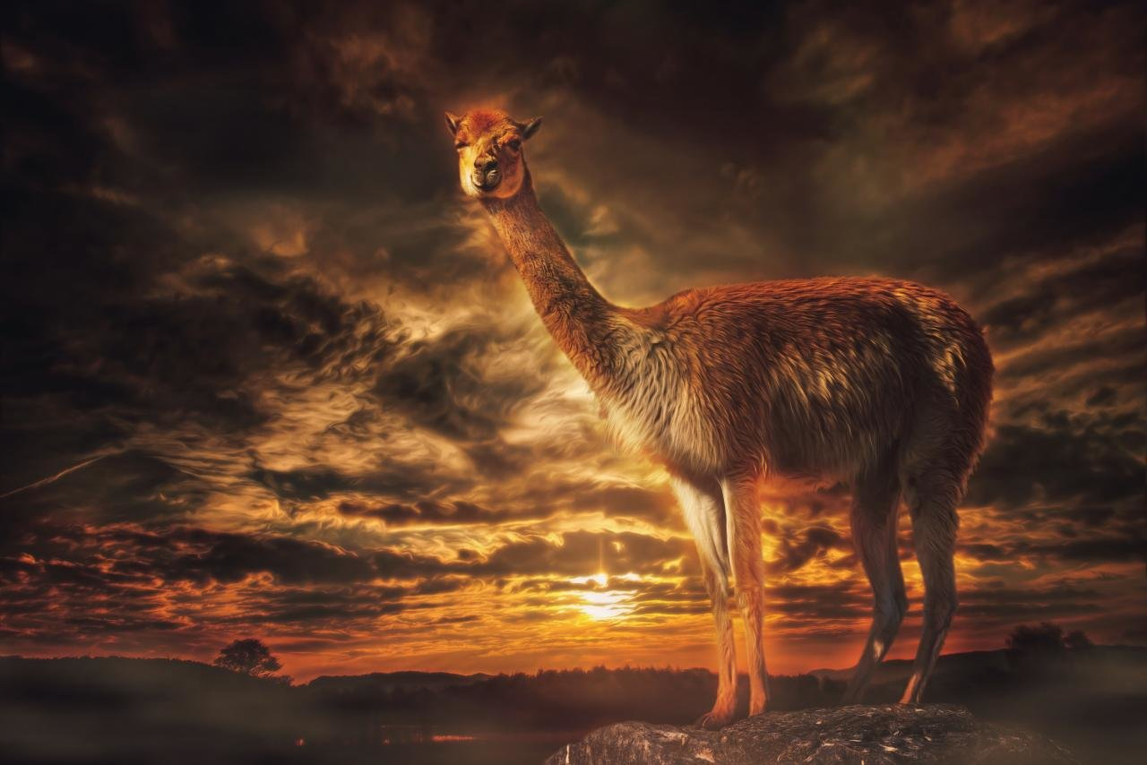 Free Llama high quality background ID:165666 for hd 1280x854 PC