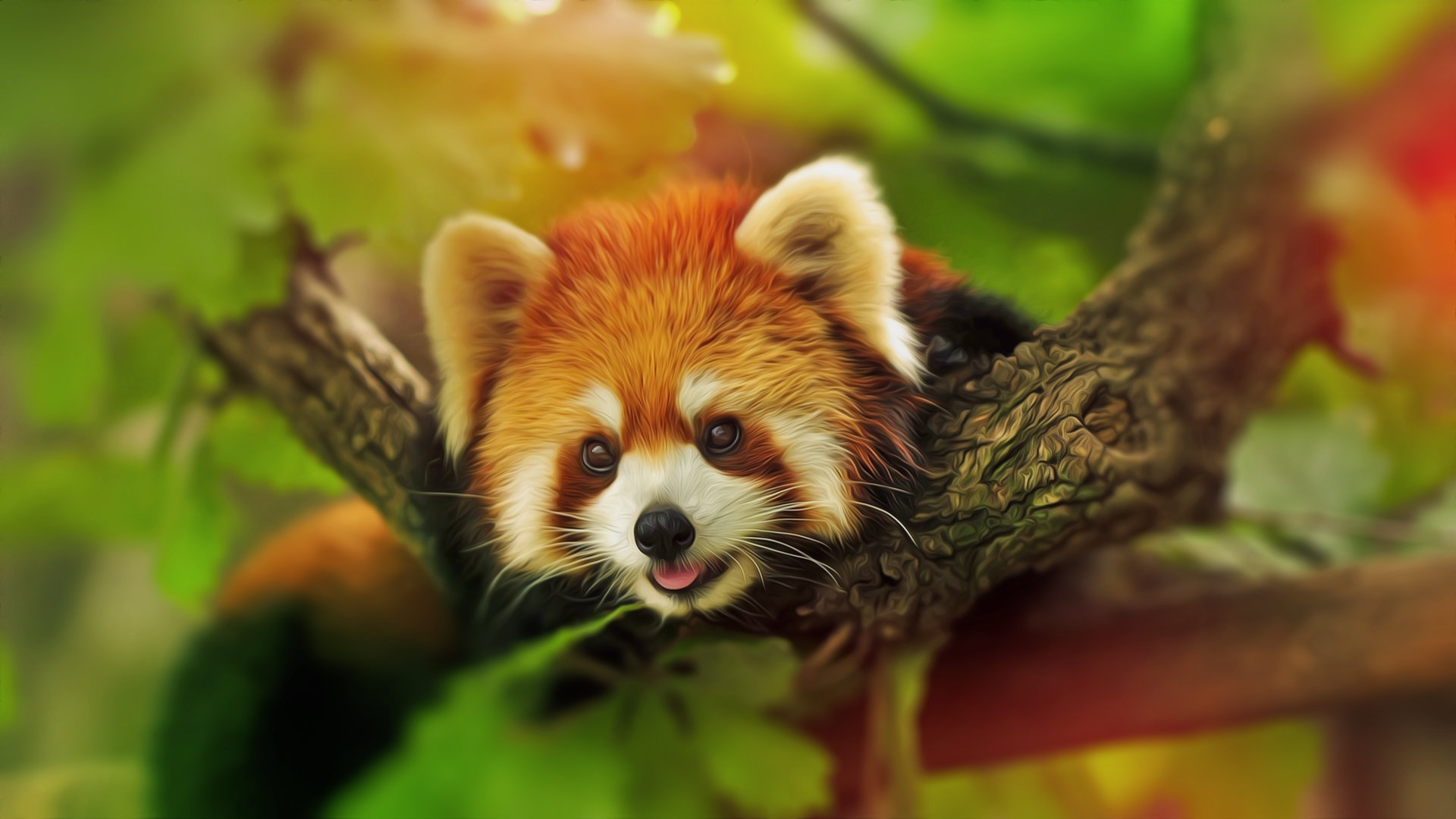 High resolution Red Panda full hd wallpaper ID:64045 for PC