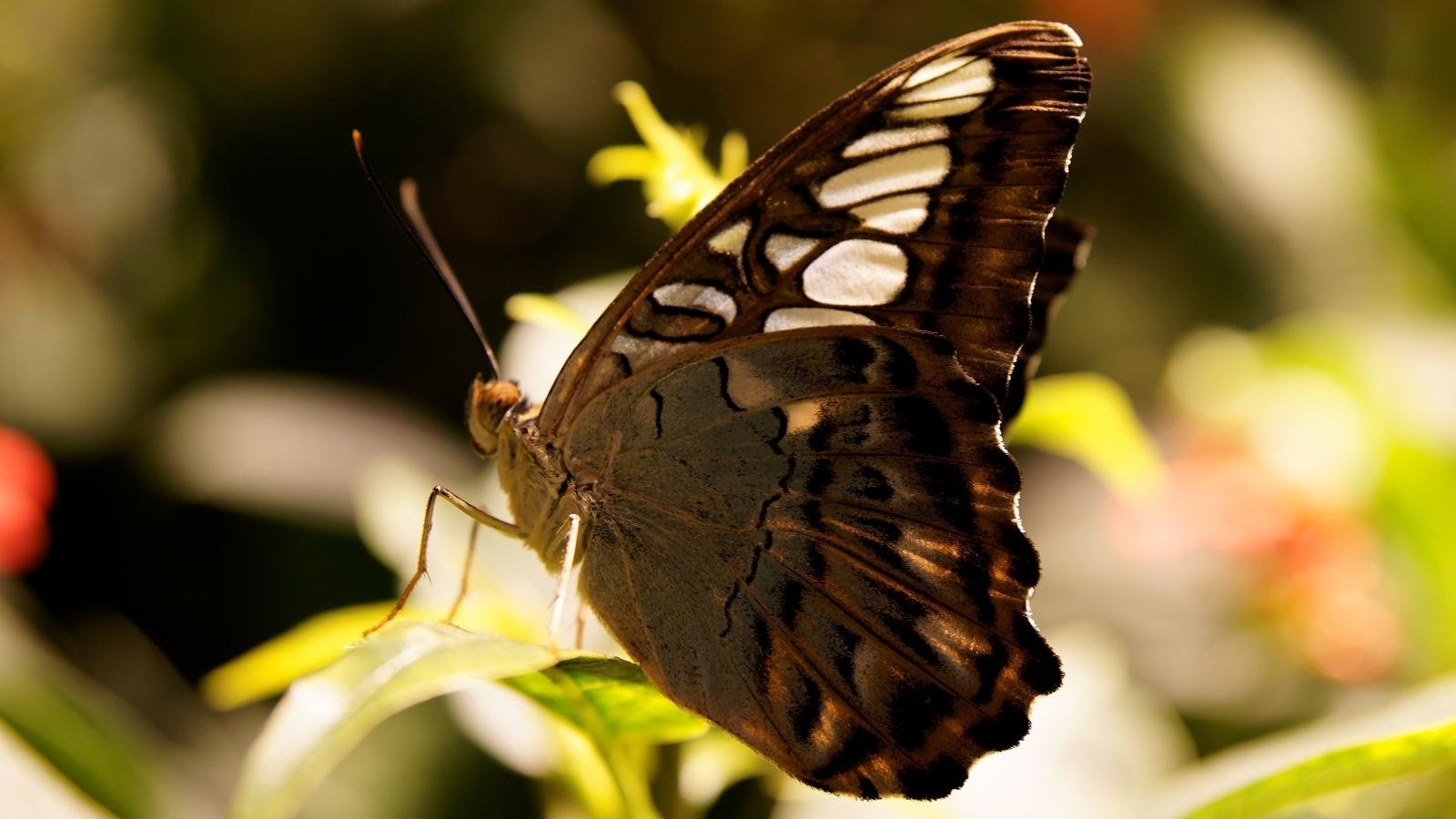 Best Butterfly wallpaper ID:168580 for High Resolution hd 1600x900 desktop