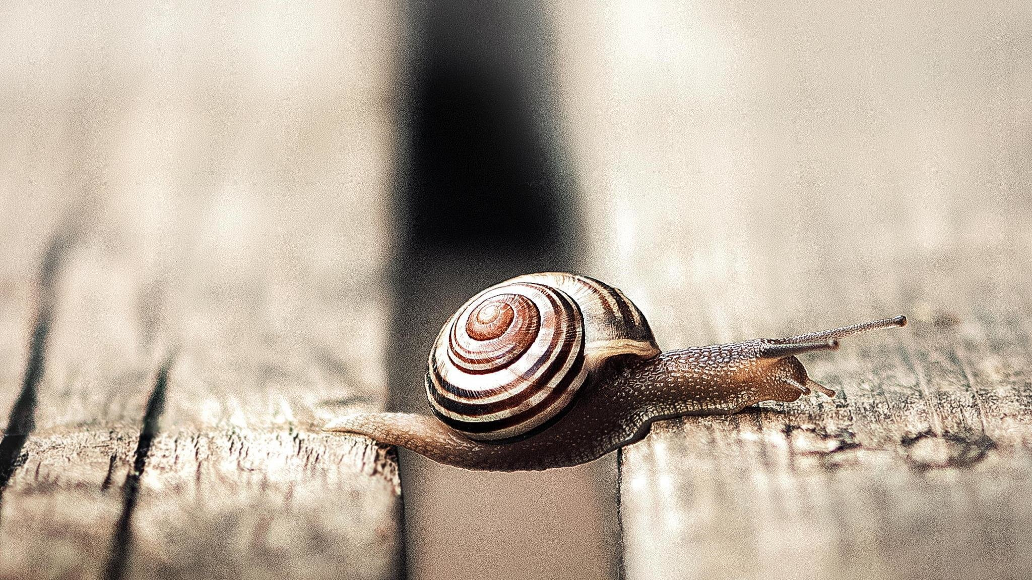 High resolution Snail hd 2048x1152 background ID:198875 for PC